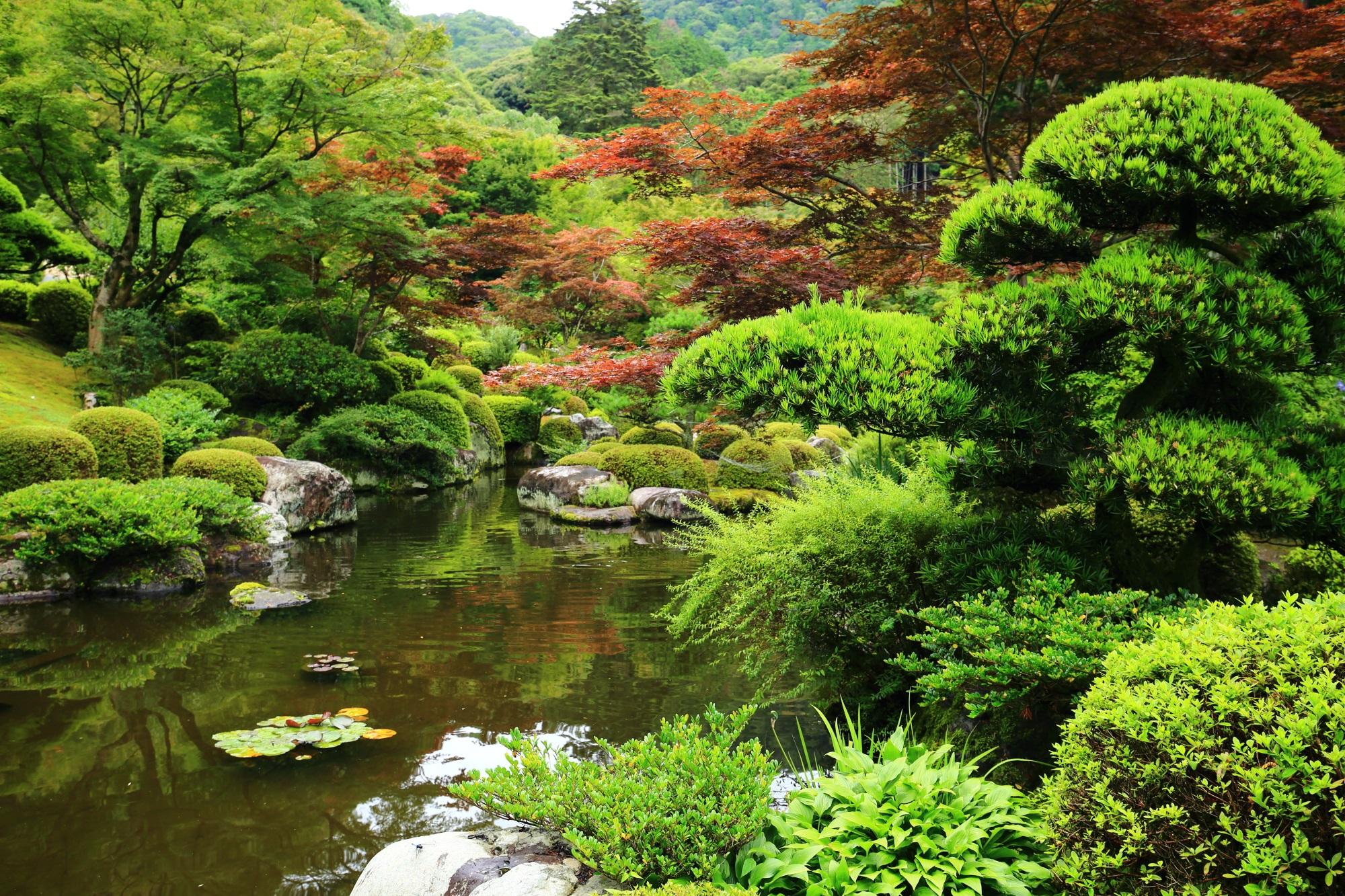 松や青もみじなど色んな緑が溢れ出す三室戸寺の池泉回遊式庭園