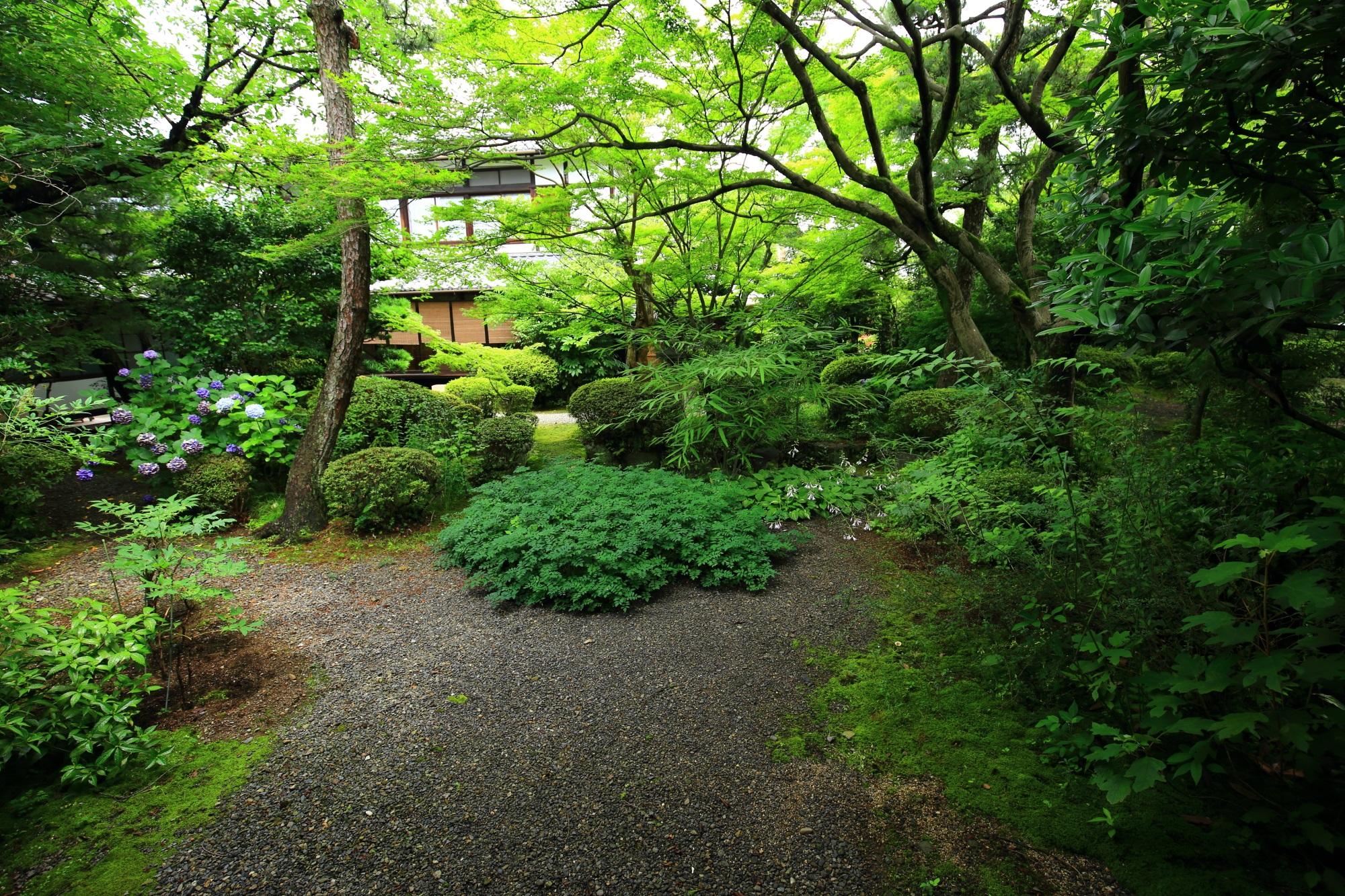 多種多様な緑が美しい廬山寺の中庭