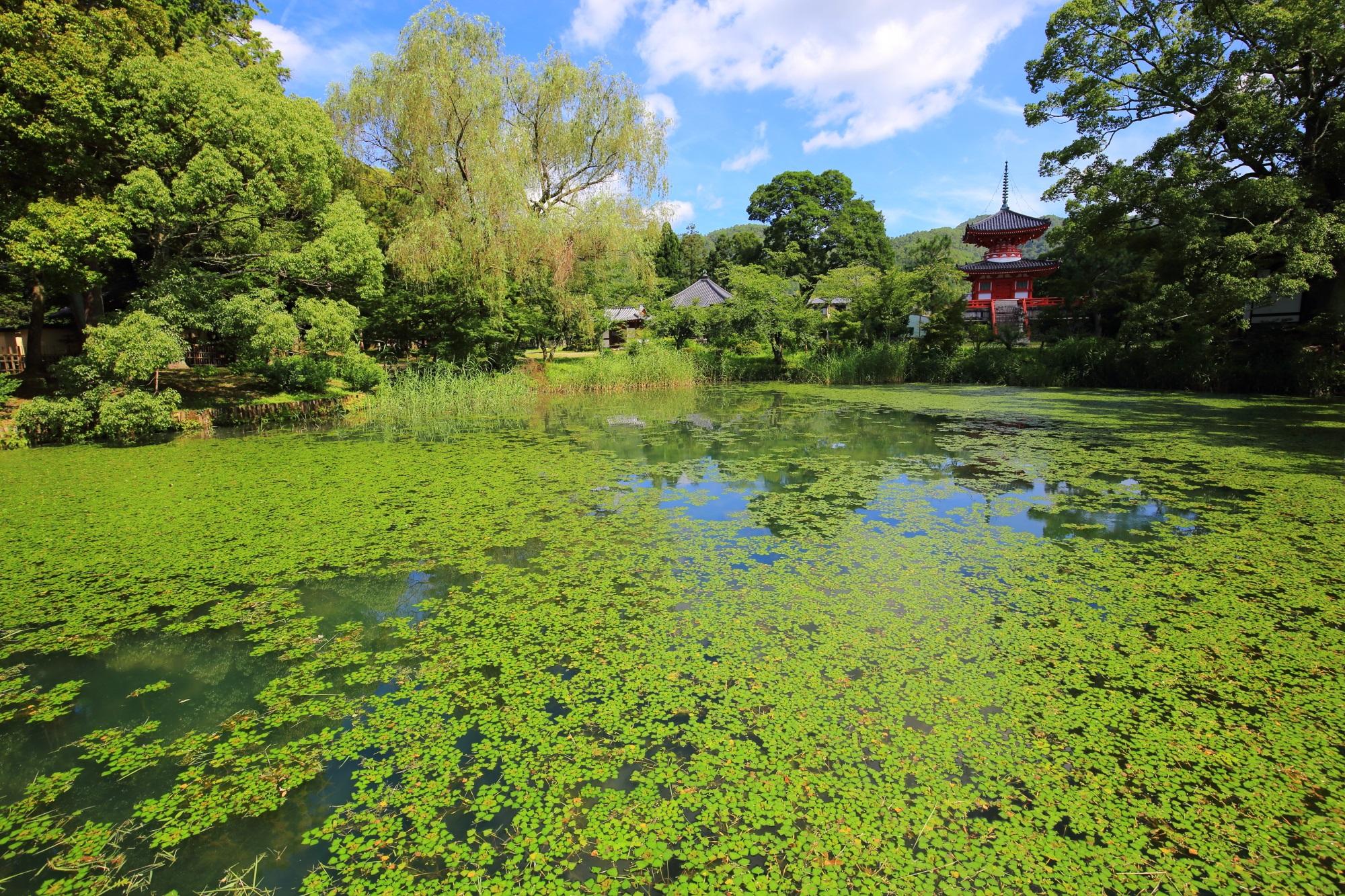 大沢池の北西側の緑に覆われた放生池と心経宝塔