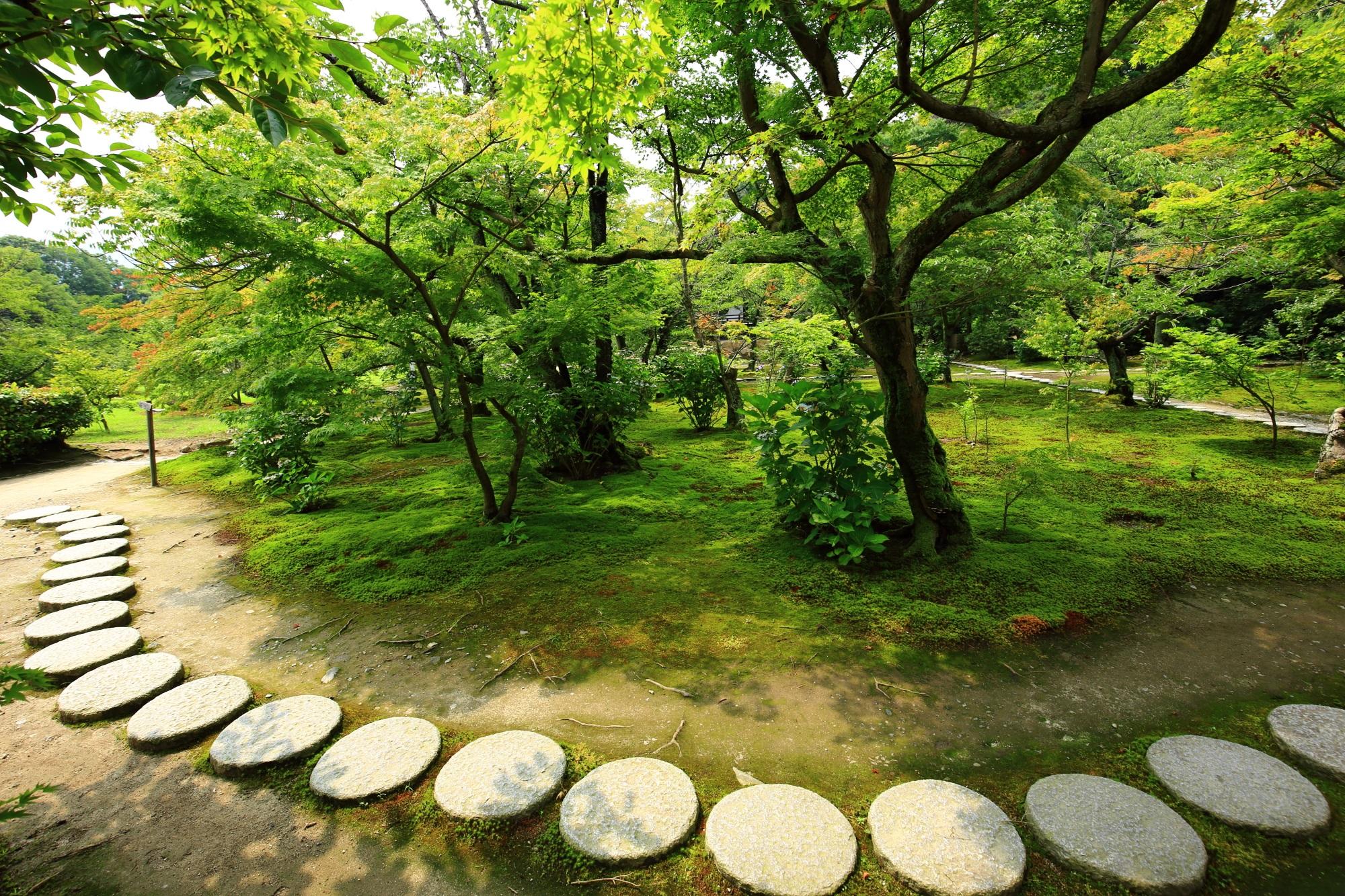 青もみじと苔の緑を囲むように続く丸い飛び石の参道