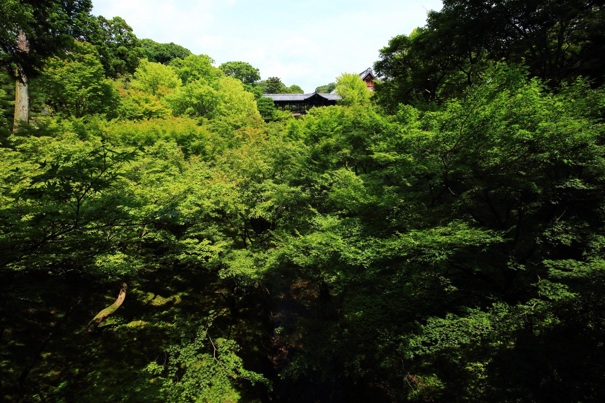 東福寺の臥雲橋から眺めた通天橋と圧巻の青もみじ