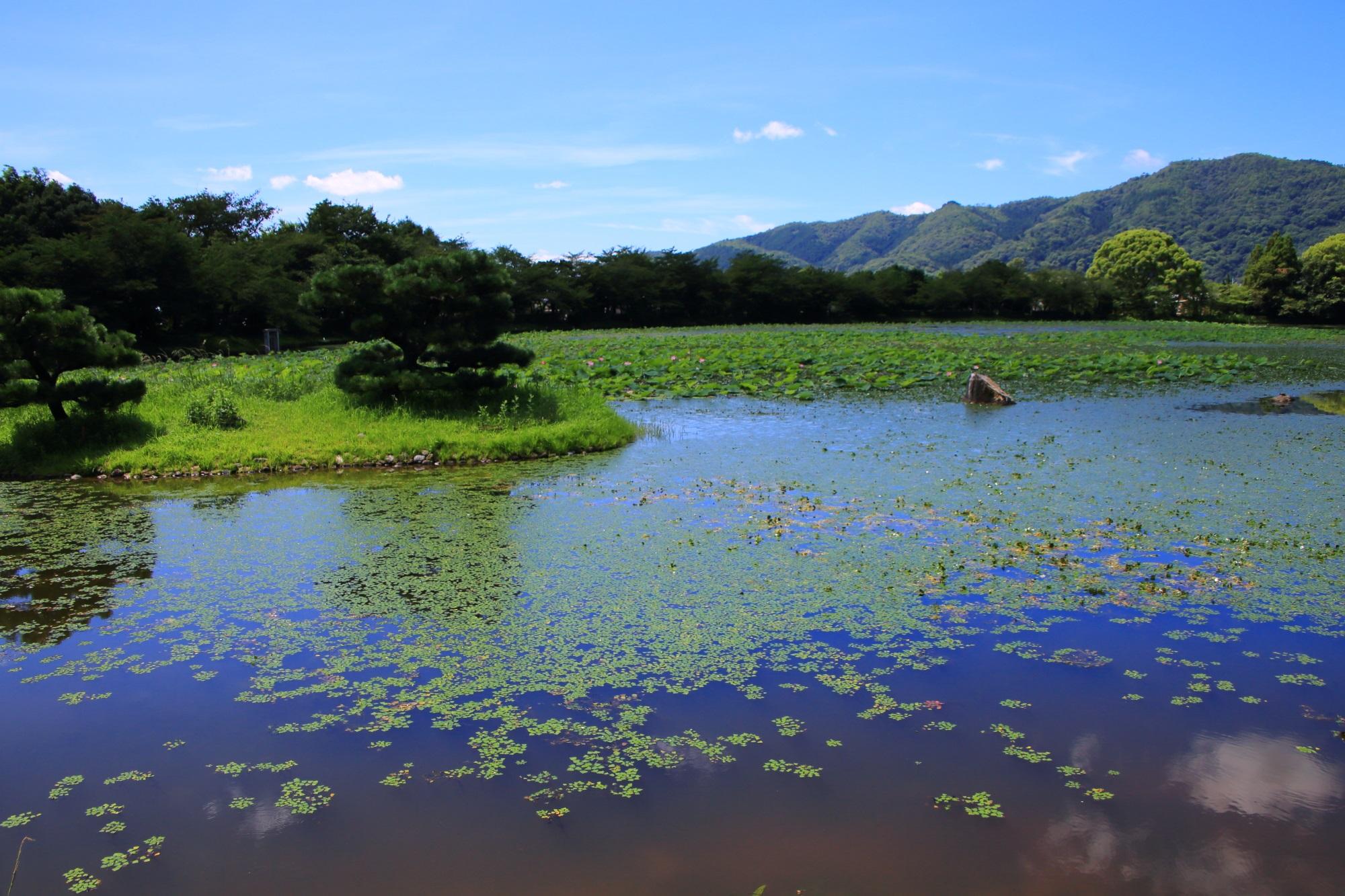 爽快な青空の下に広がる美しく長閑な大沢池