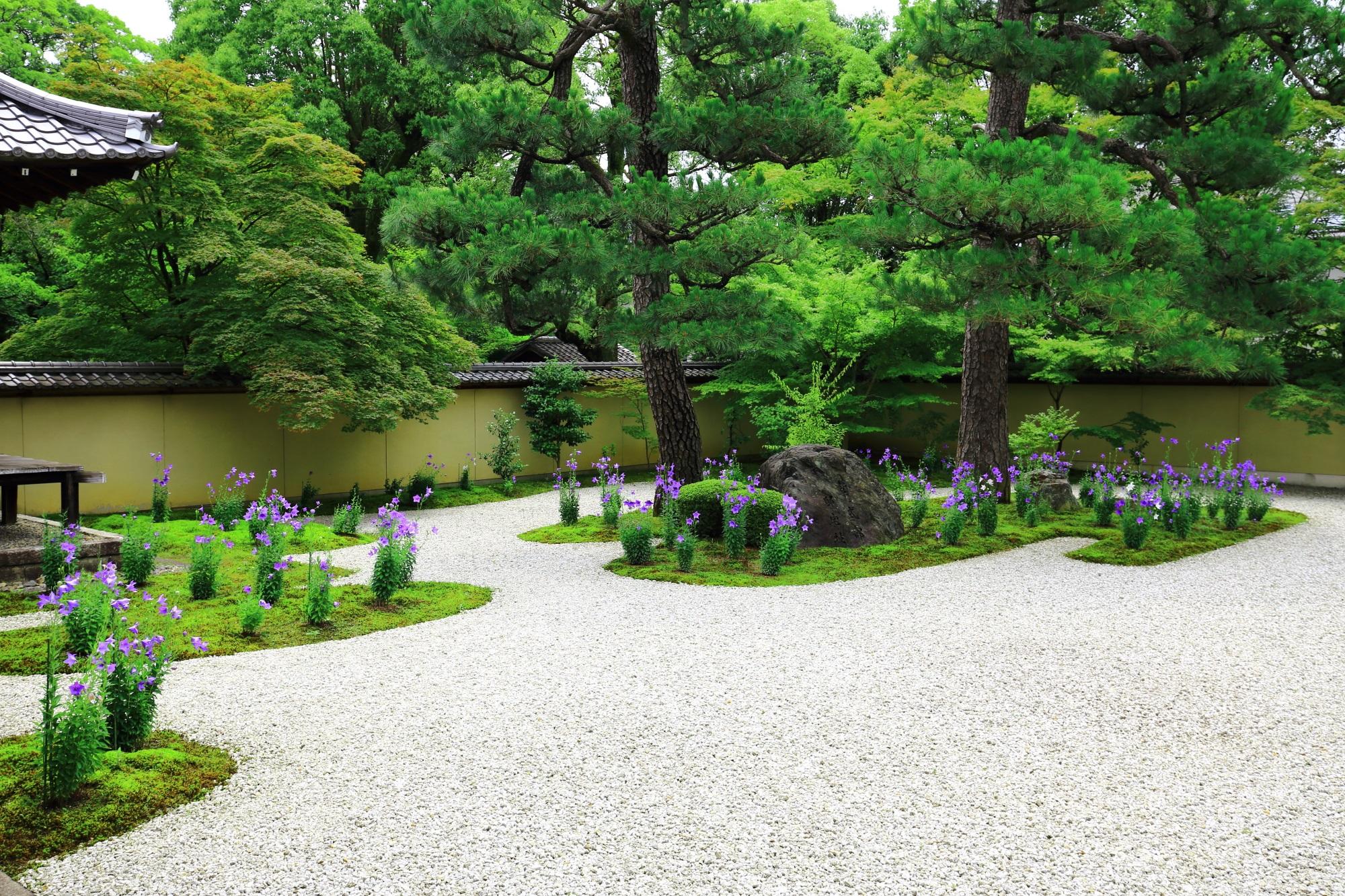 青もみじや松などの深い緑に覆われた源氏庭の背景