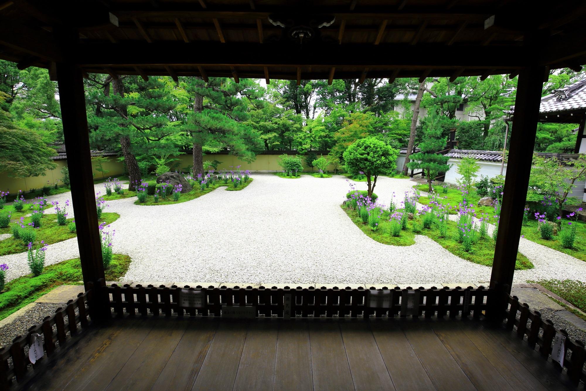 廬山寺 桔梗 初夏を彩る艶やかな紫と美しい緑