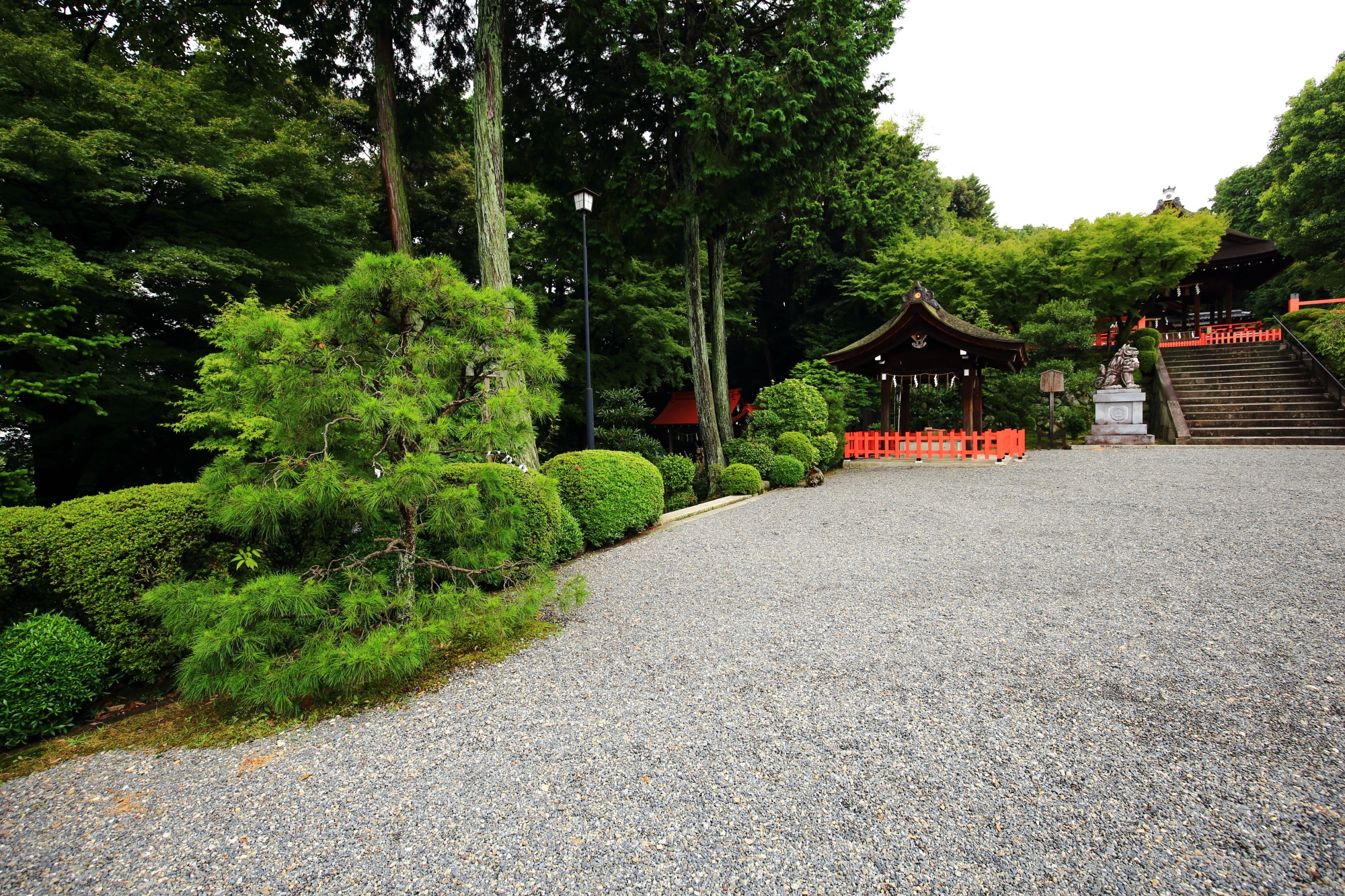 建勲神社の境内の美しい青もみじ