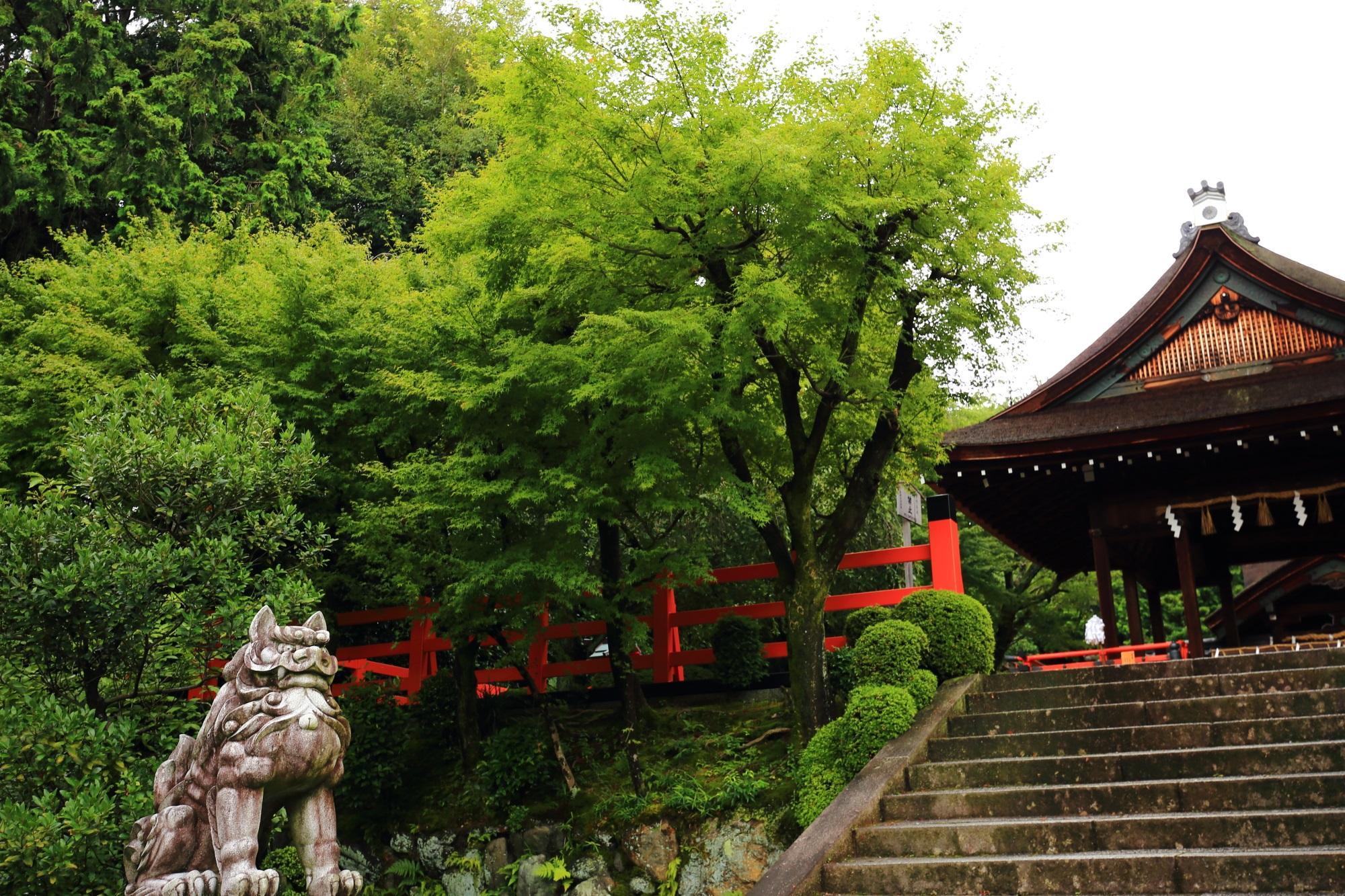 建勲神社の拝殿と青もみじ