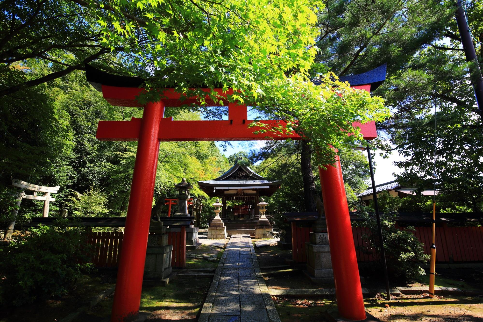 竹中稲荷神社の鮮やかな青もみじも綺麗な