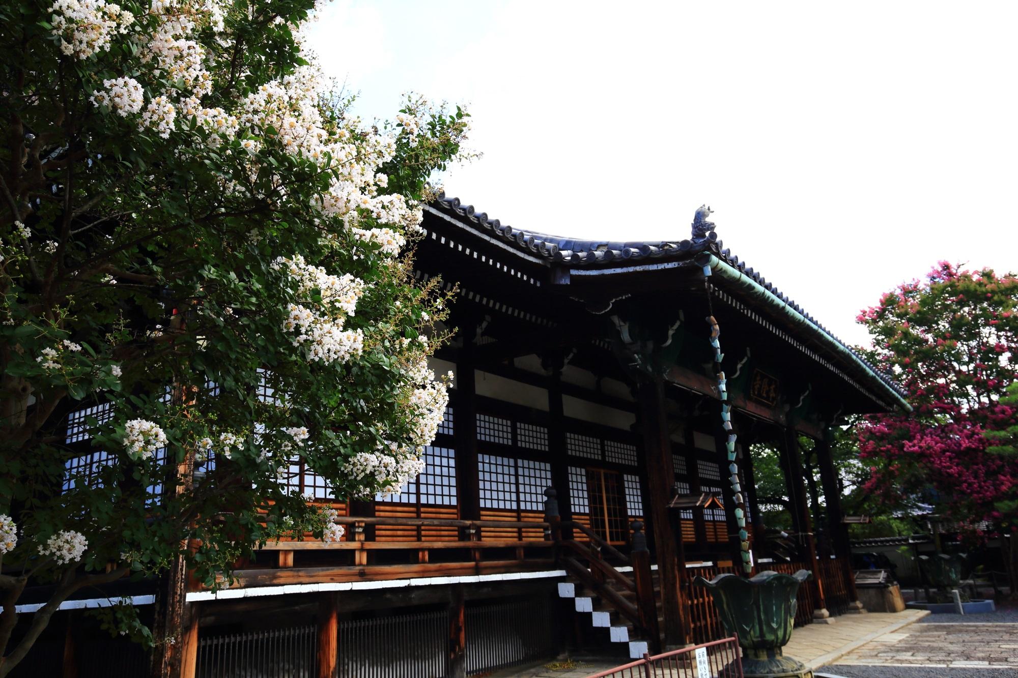 本隆寺の見事に咲く白い百日紅の花