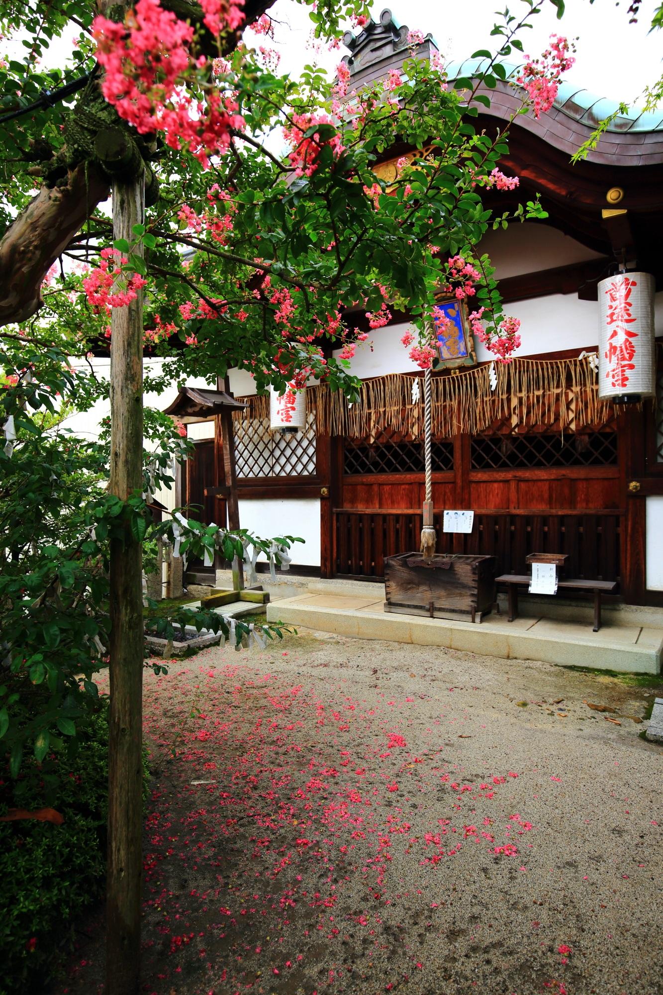 首途八幡宮の本殿を美しいピンクに染める百日紅(サルスベリ)