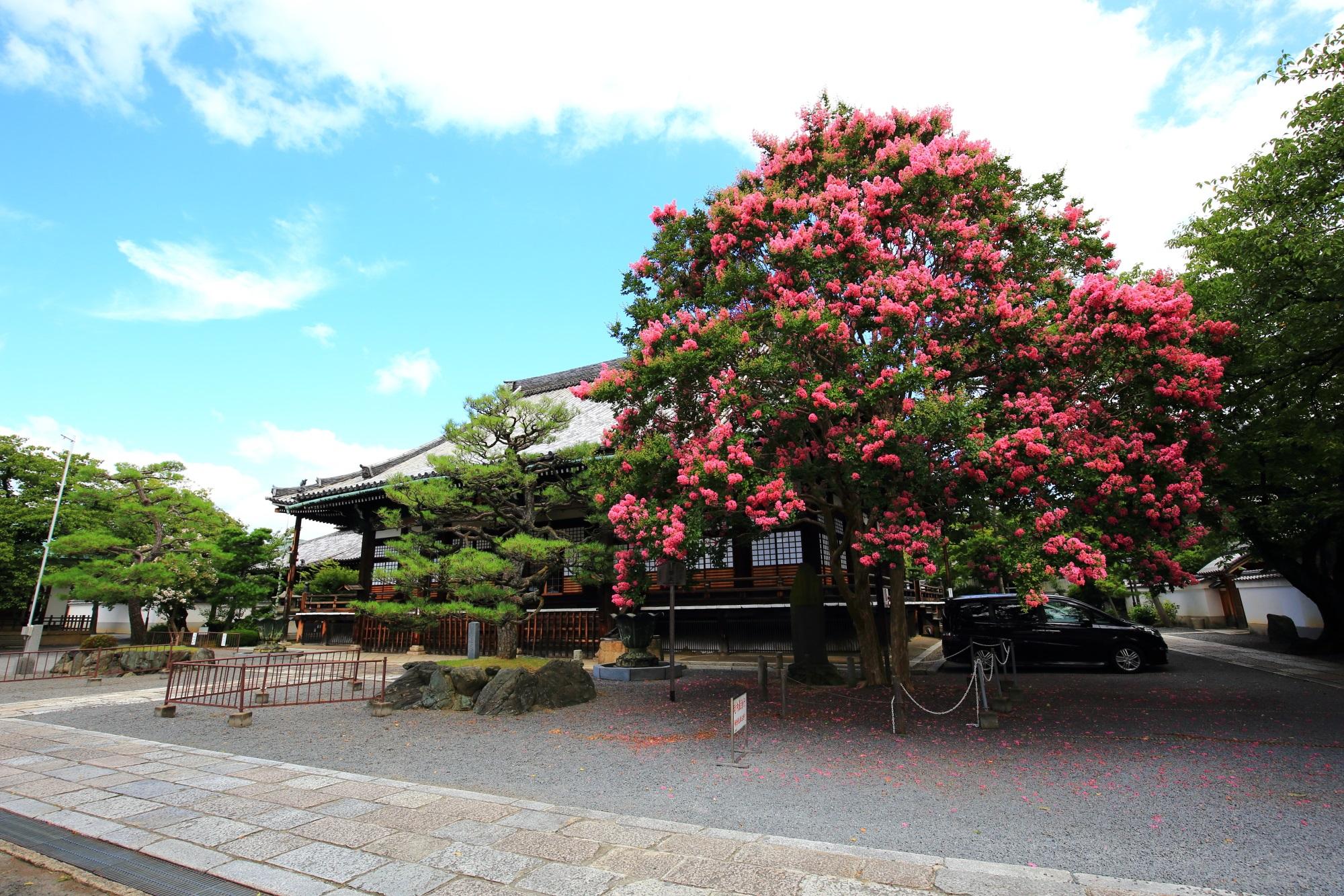 本隆寺の満開のサルスベリ