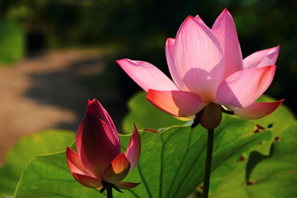 季節ごとに色んな花が咲くため「花の寺」と呼ばれる法金剛院