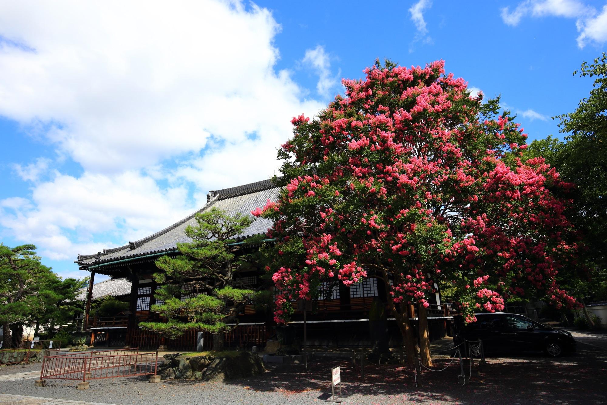 本隆寺の素晴らしい百日紅の花と夏の情景