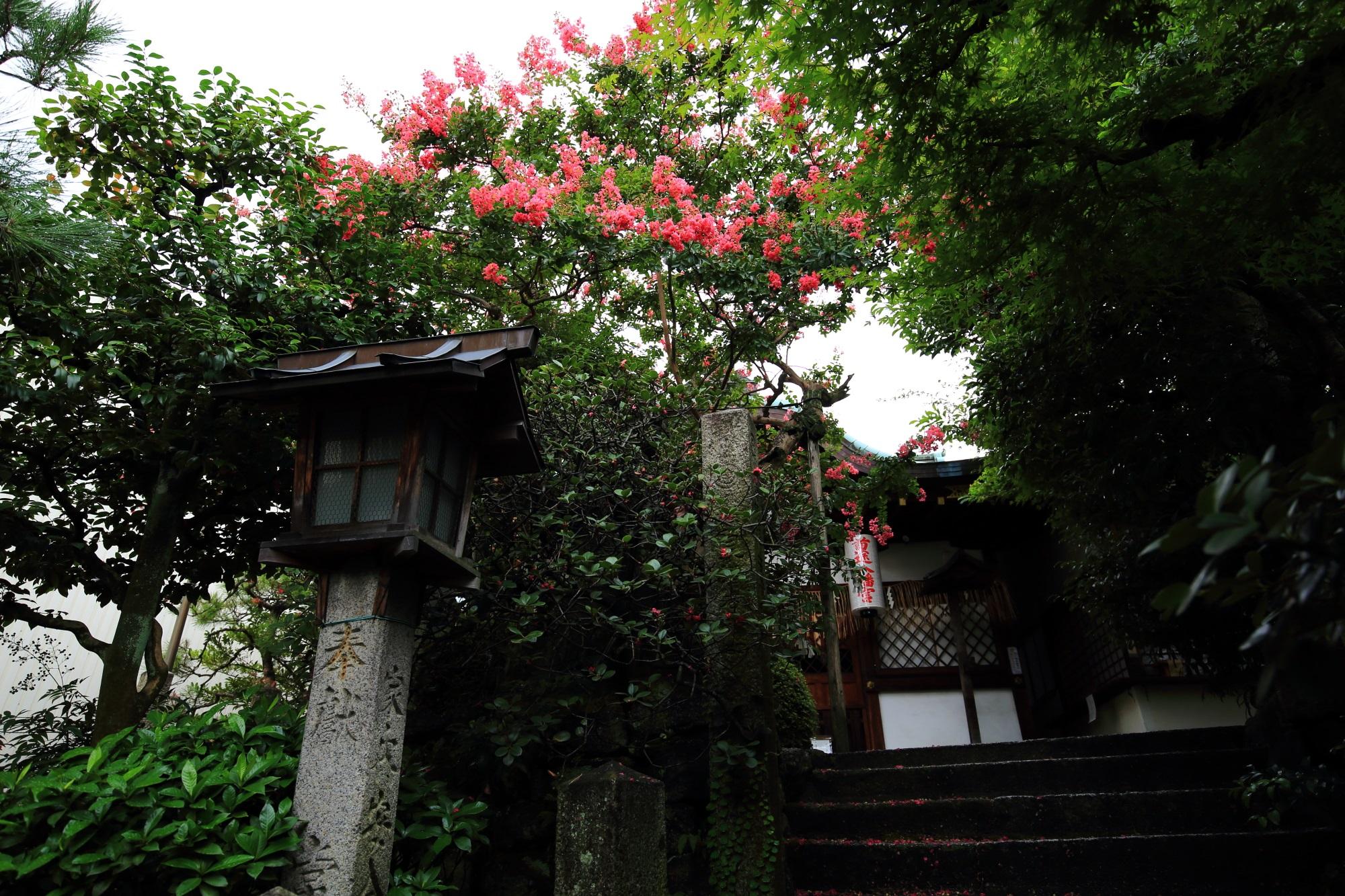 首途八幡宮の本殿前で咲く百日紅(サルスベリ)