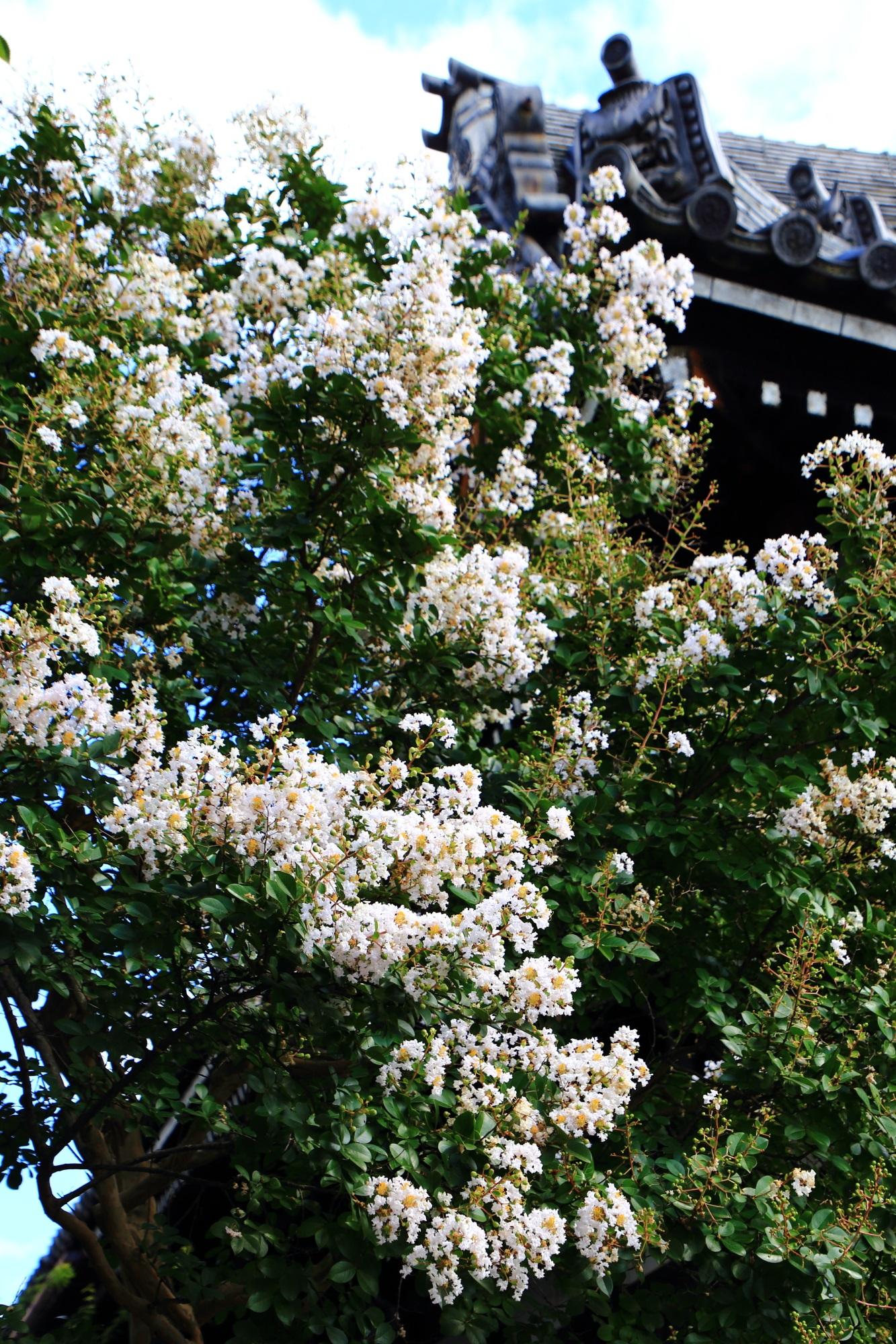 真夏の境内や伽藍を彩る溢れんばかりの白い百日紅の花