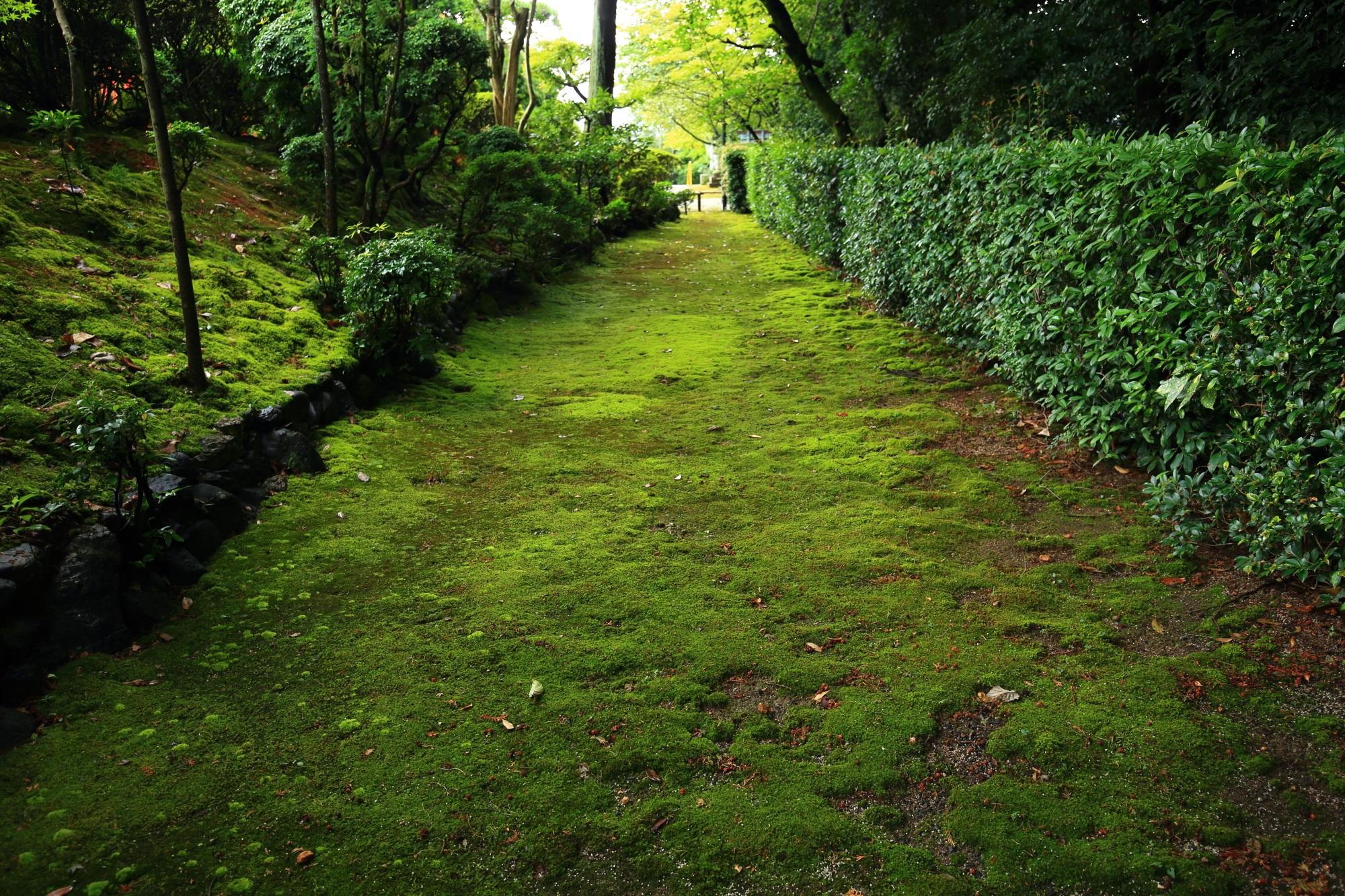建勲神社の南参道の苔