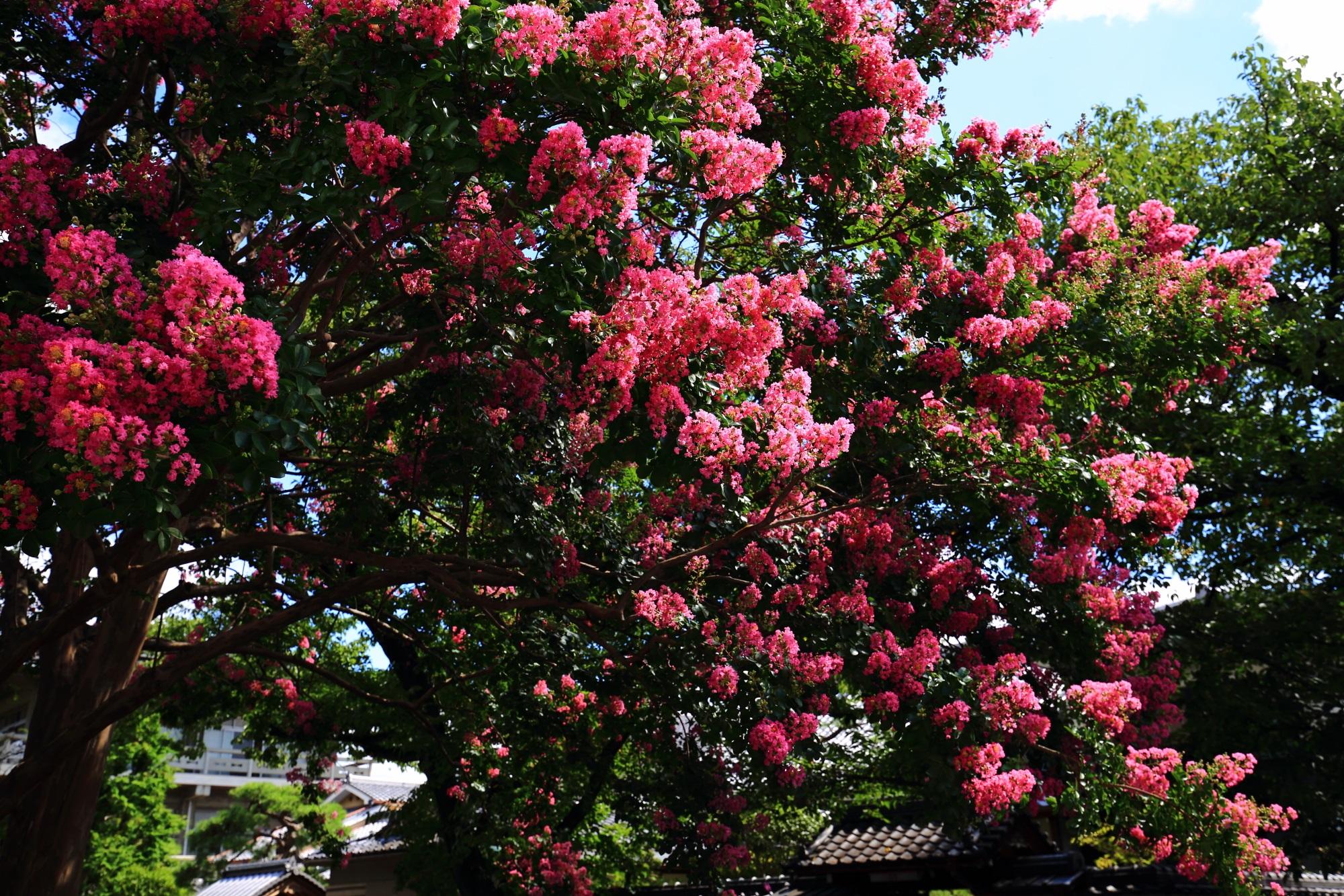 太陽を浴びて煌びやかに輝くピンクの花