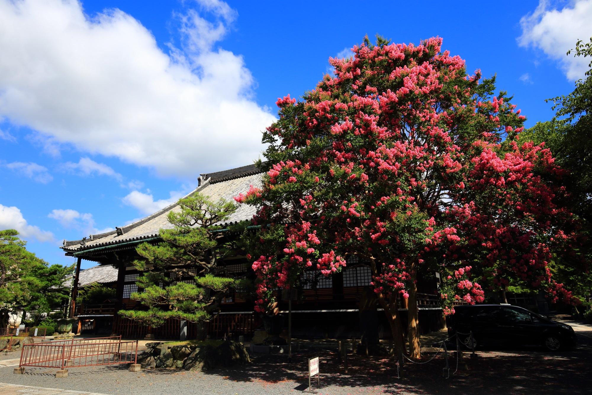 本隆寺 百日紅(さるすべり) 真夏を彩るピンクの花