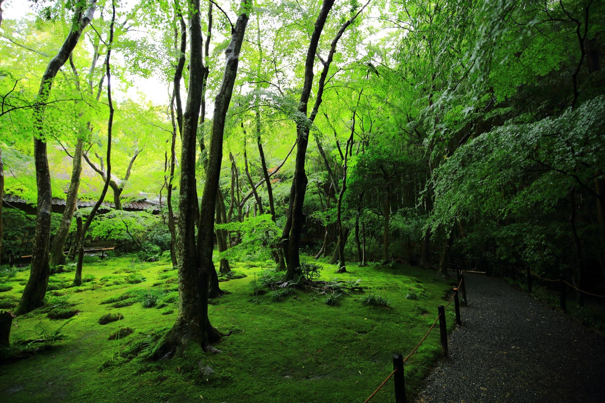 苔庭を囲むように続く参道