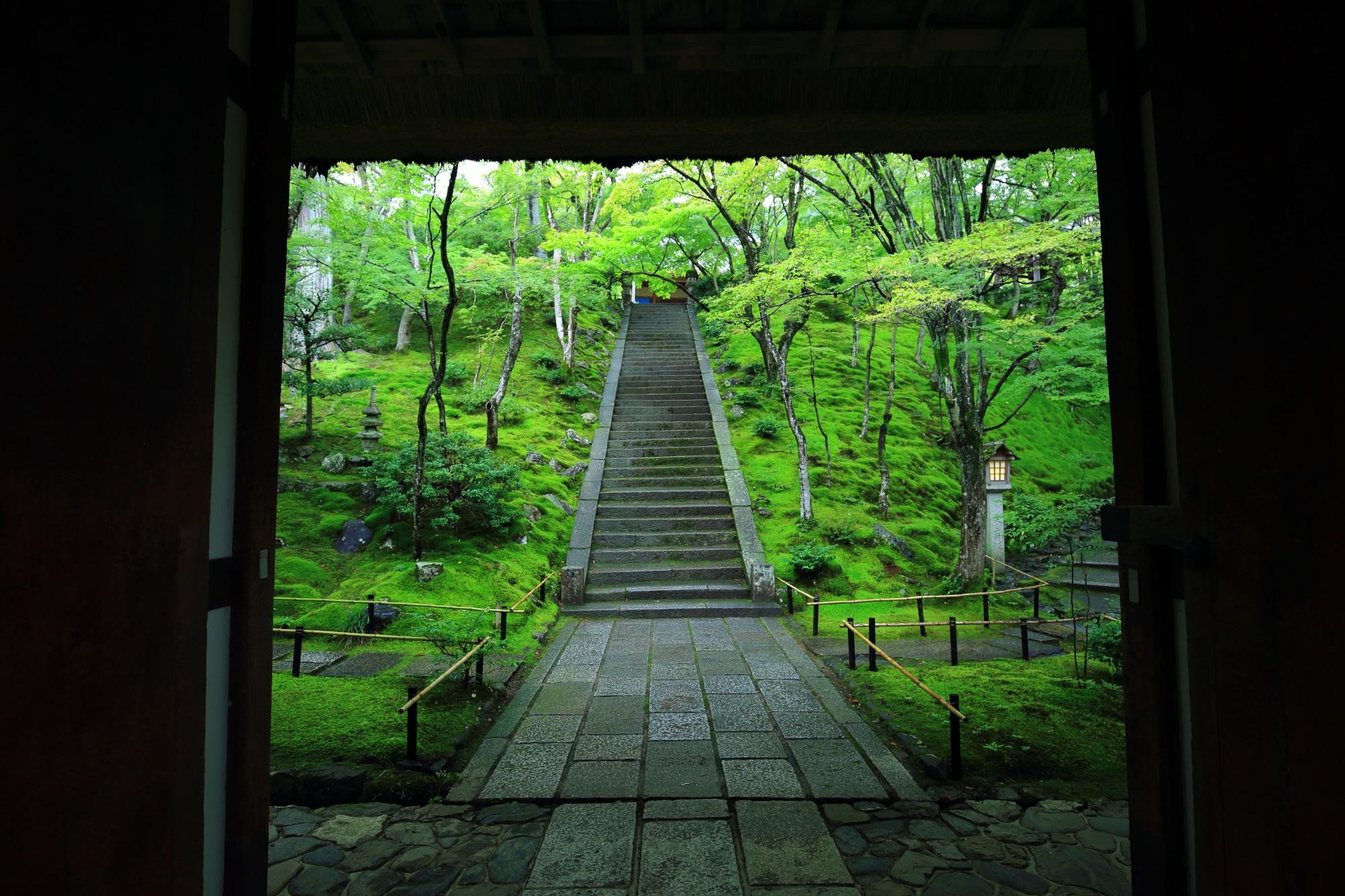 常寂光寺の仁王門から眺めた本堂前石段と苔と青もみじ