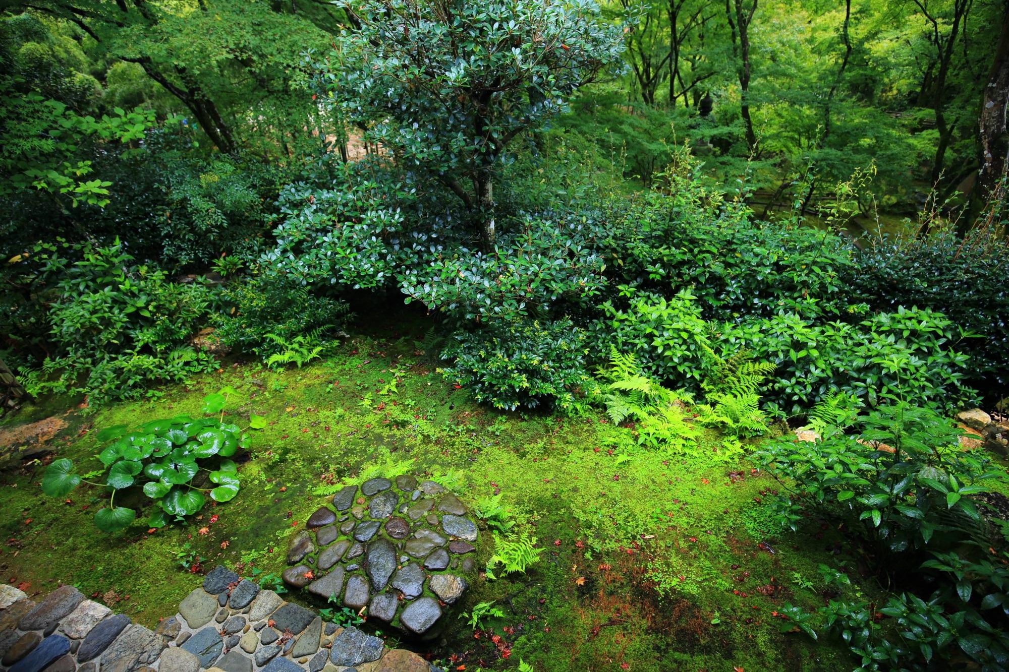 本堂の見事な中庭