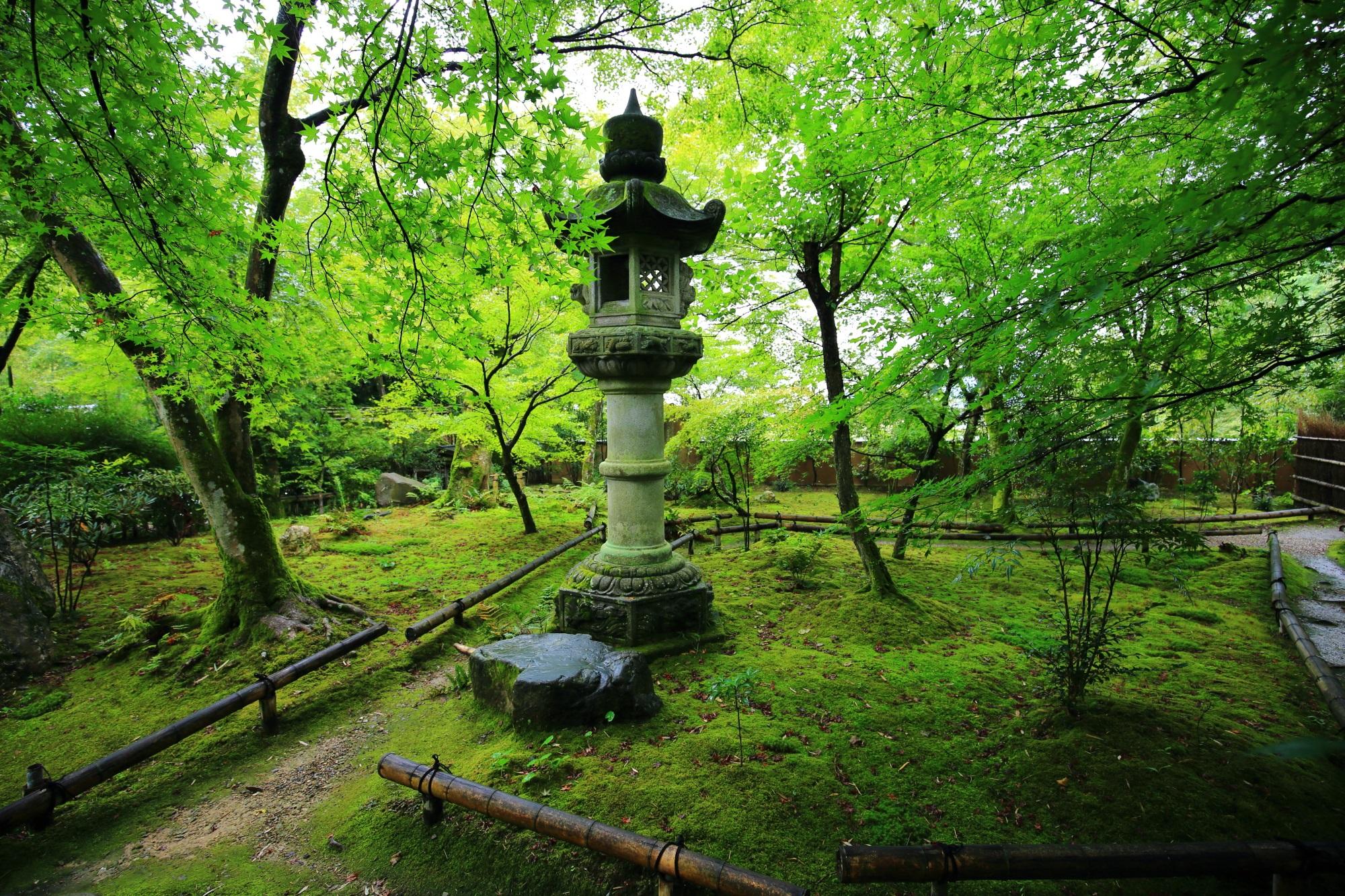 苔庭の苔と青もみじと燈籠