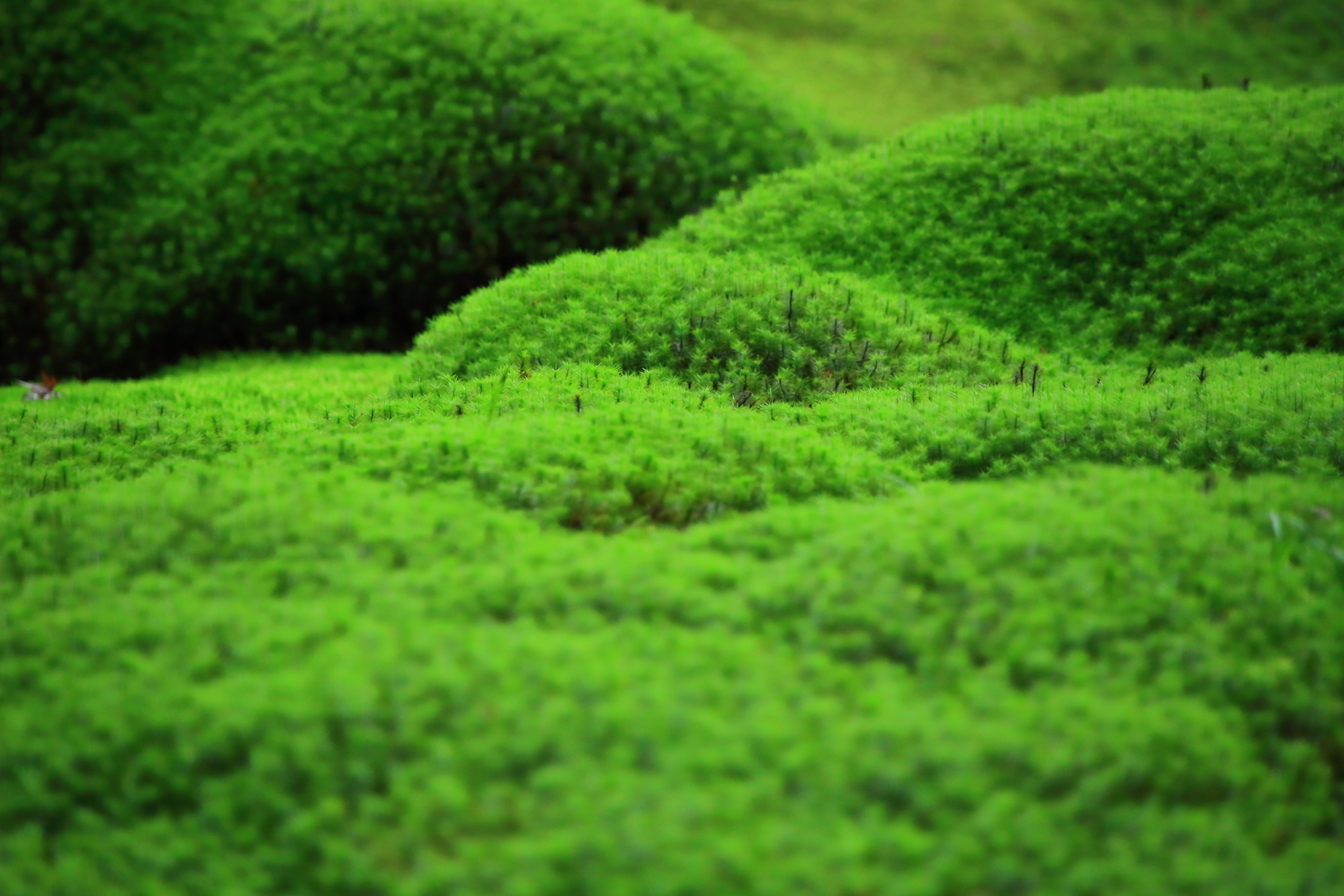 柔らかく優しそうな緑の苔
