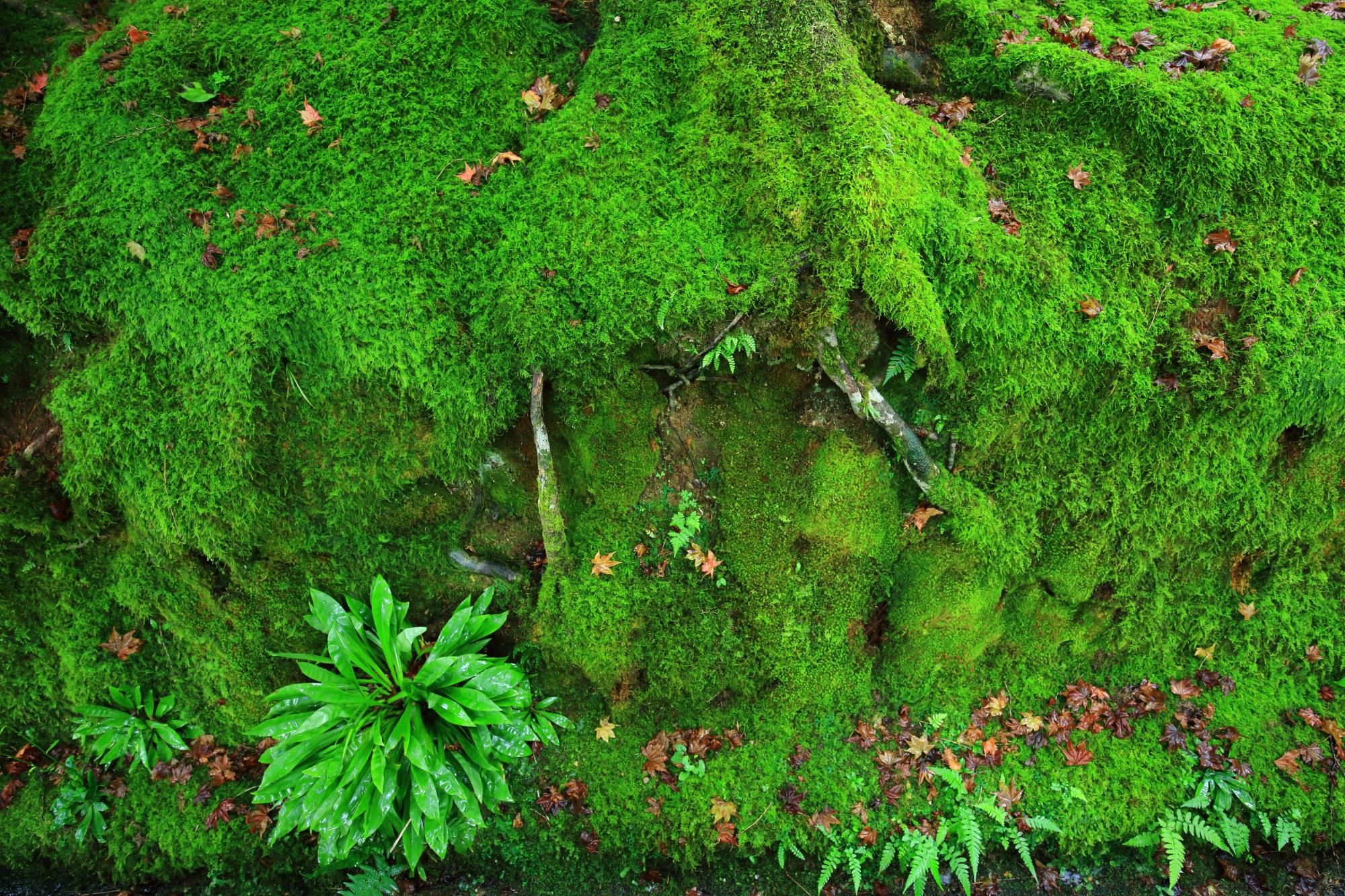 仁王門付近の美しい苔