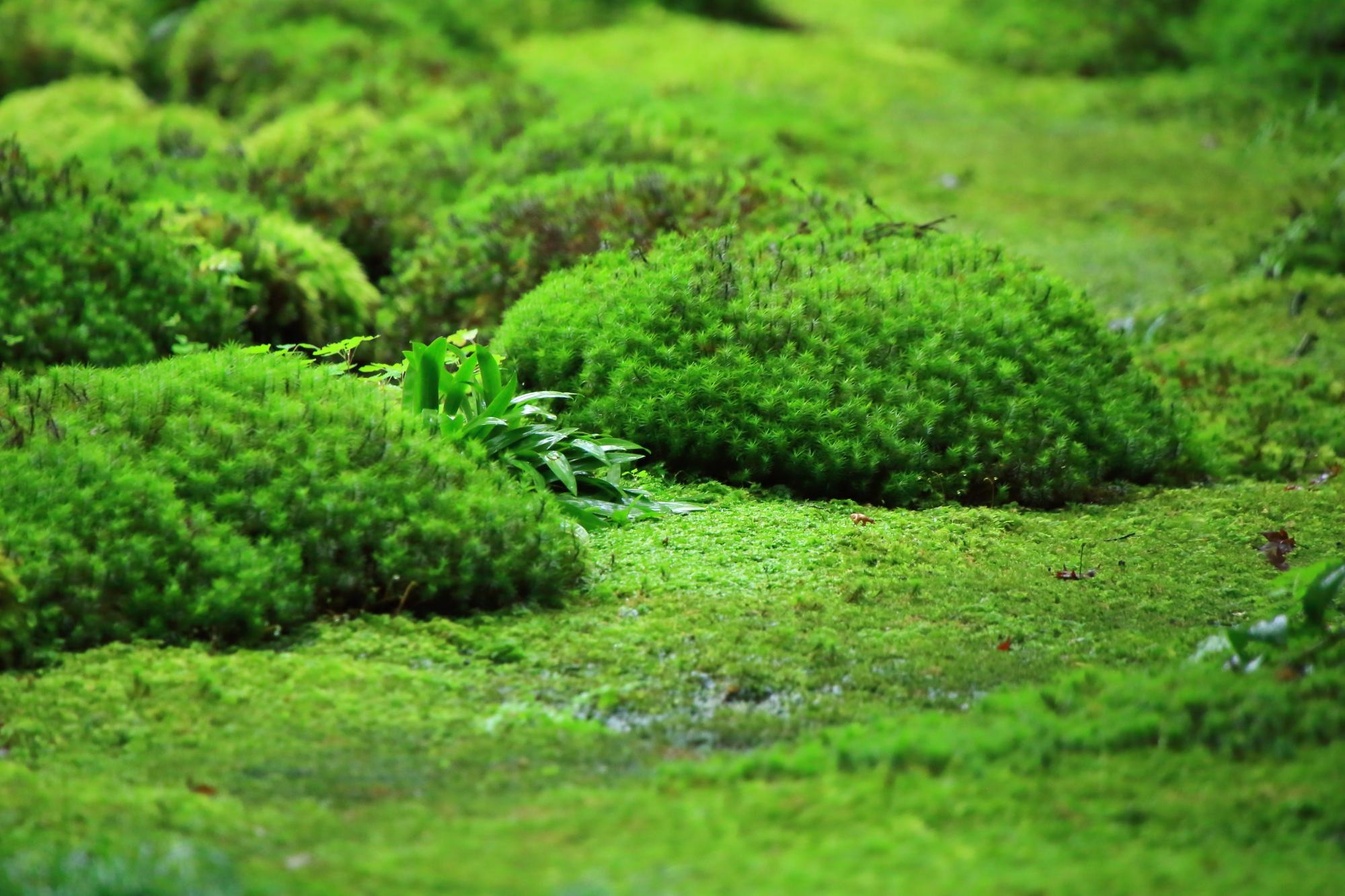 モコモコしたたくさんの苔の山