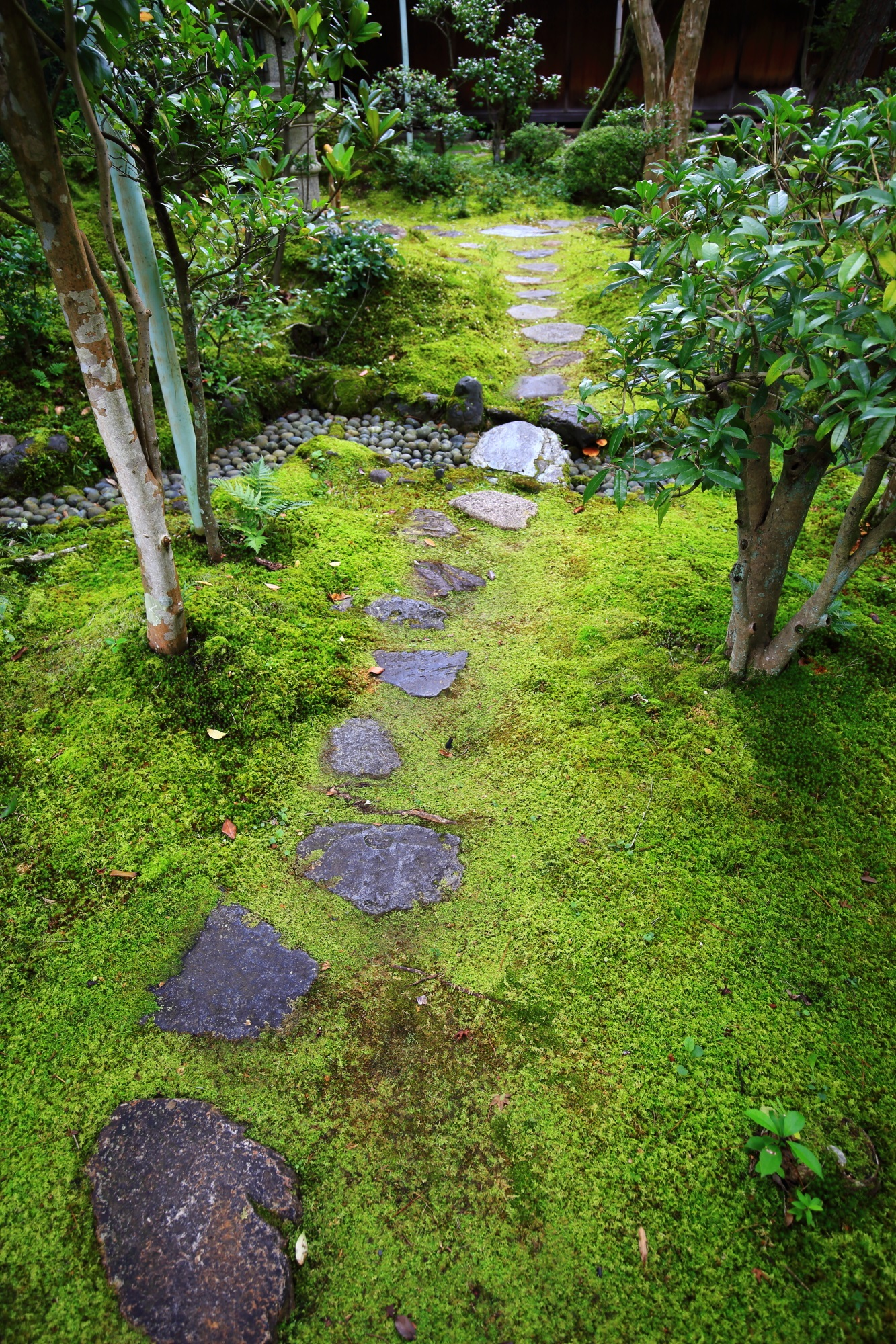南禅寺大寧軒の潤った苔と飛び石