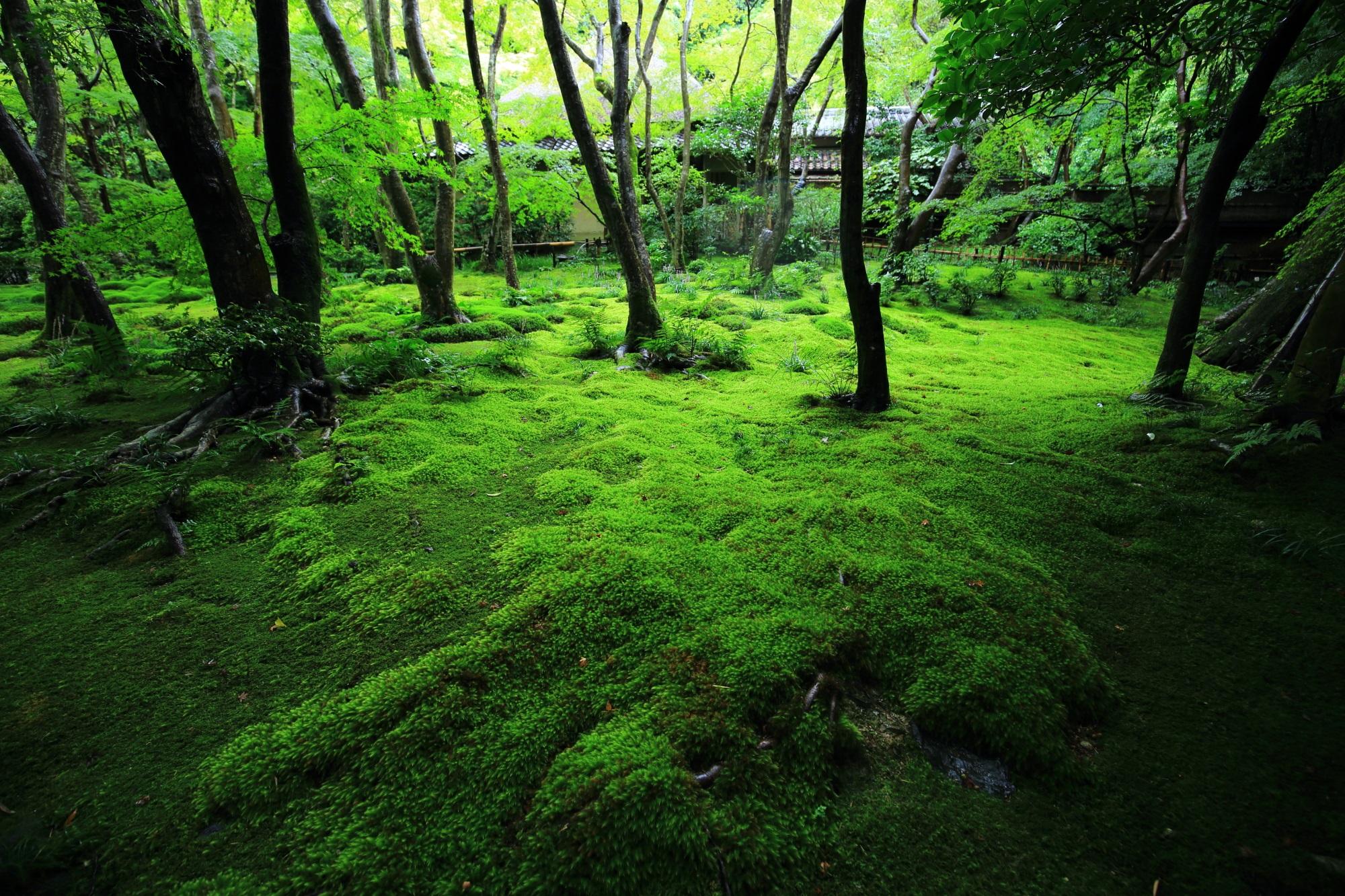 深い緑につつまれた空間に静かに佇む草庵