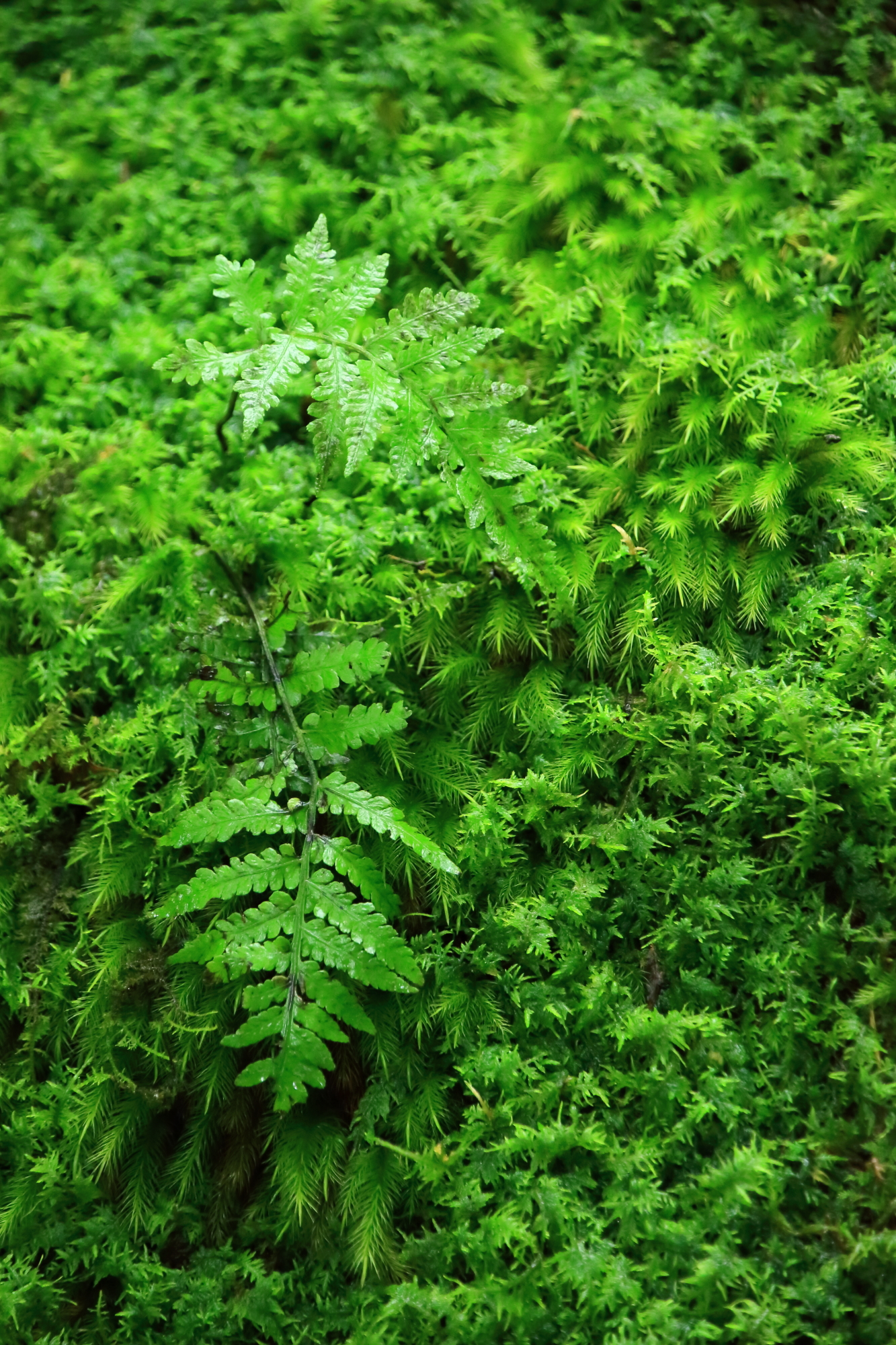 多様な苔の上の小さな可愛いシダ