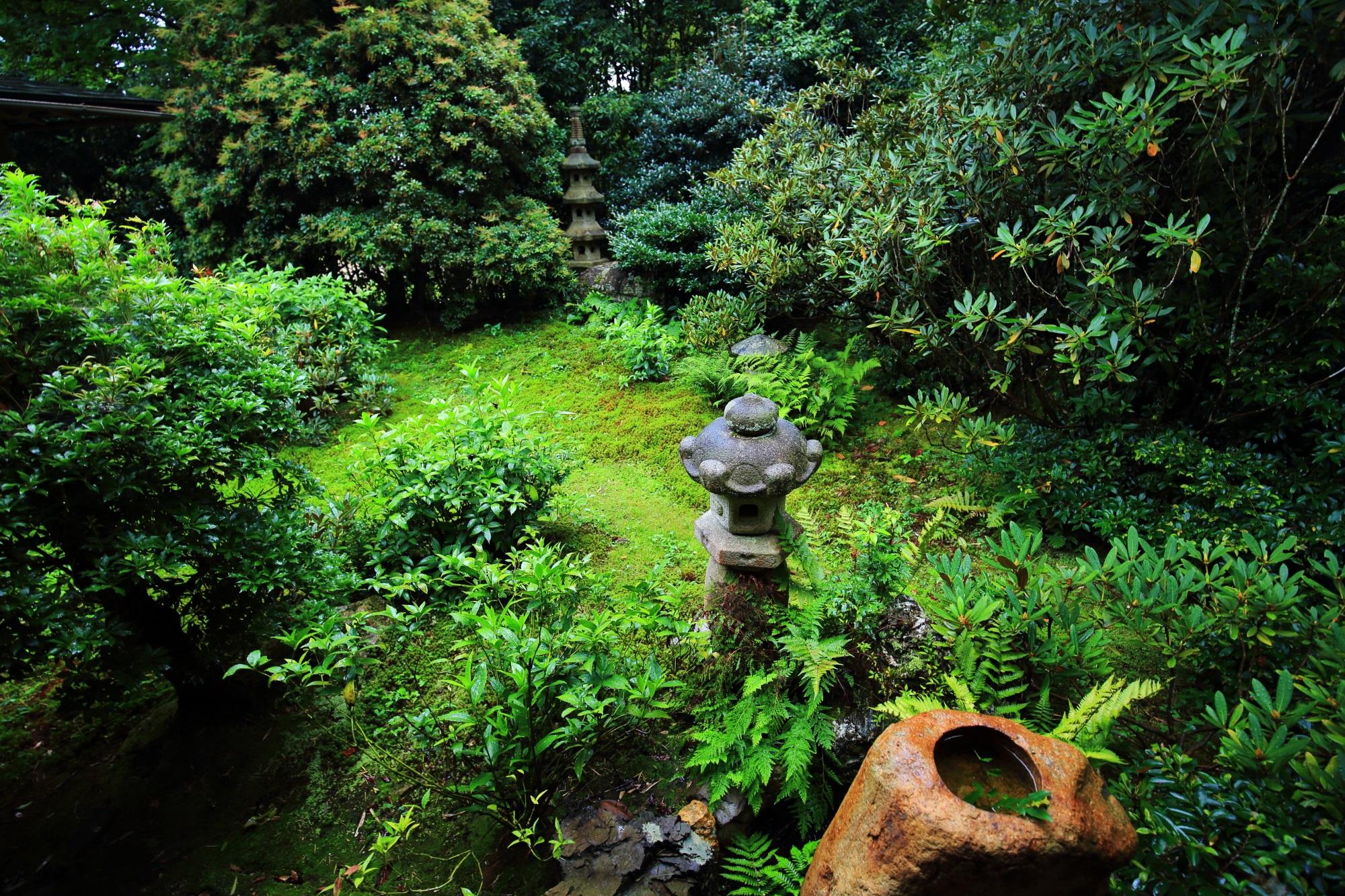 本堂中庭の苔とシダと灯籠