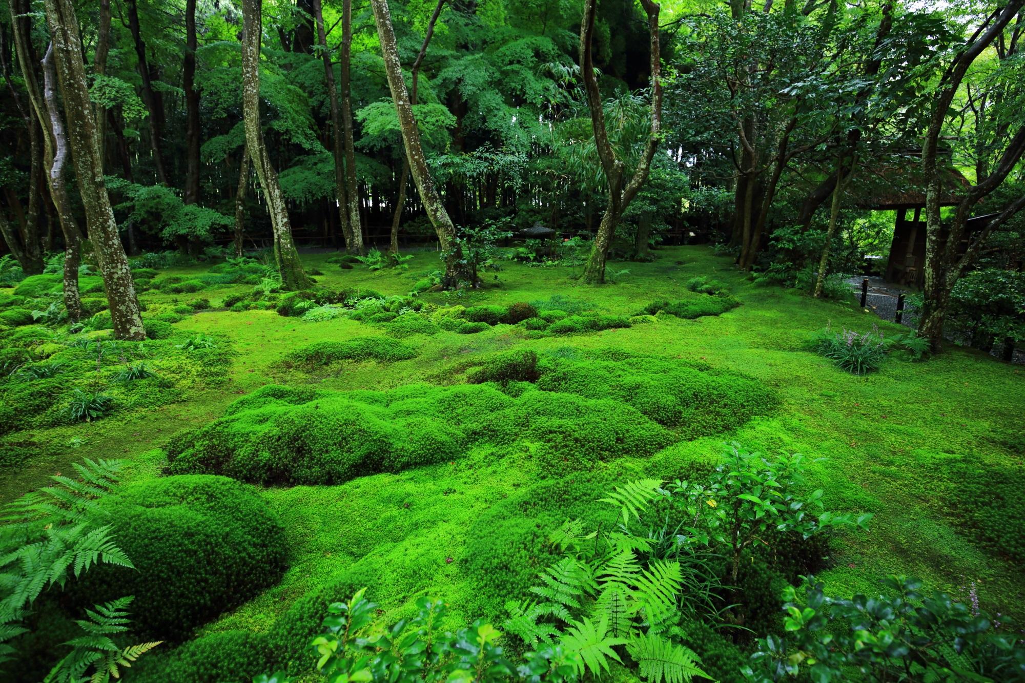 祇王寺の素晴らしすぎる苔庭と雨の情景