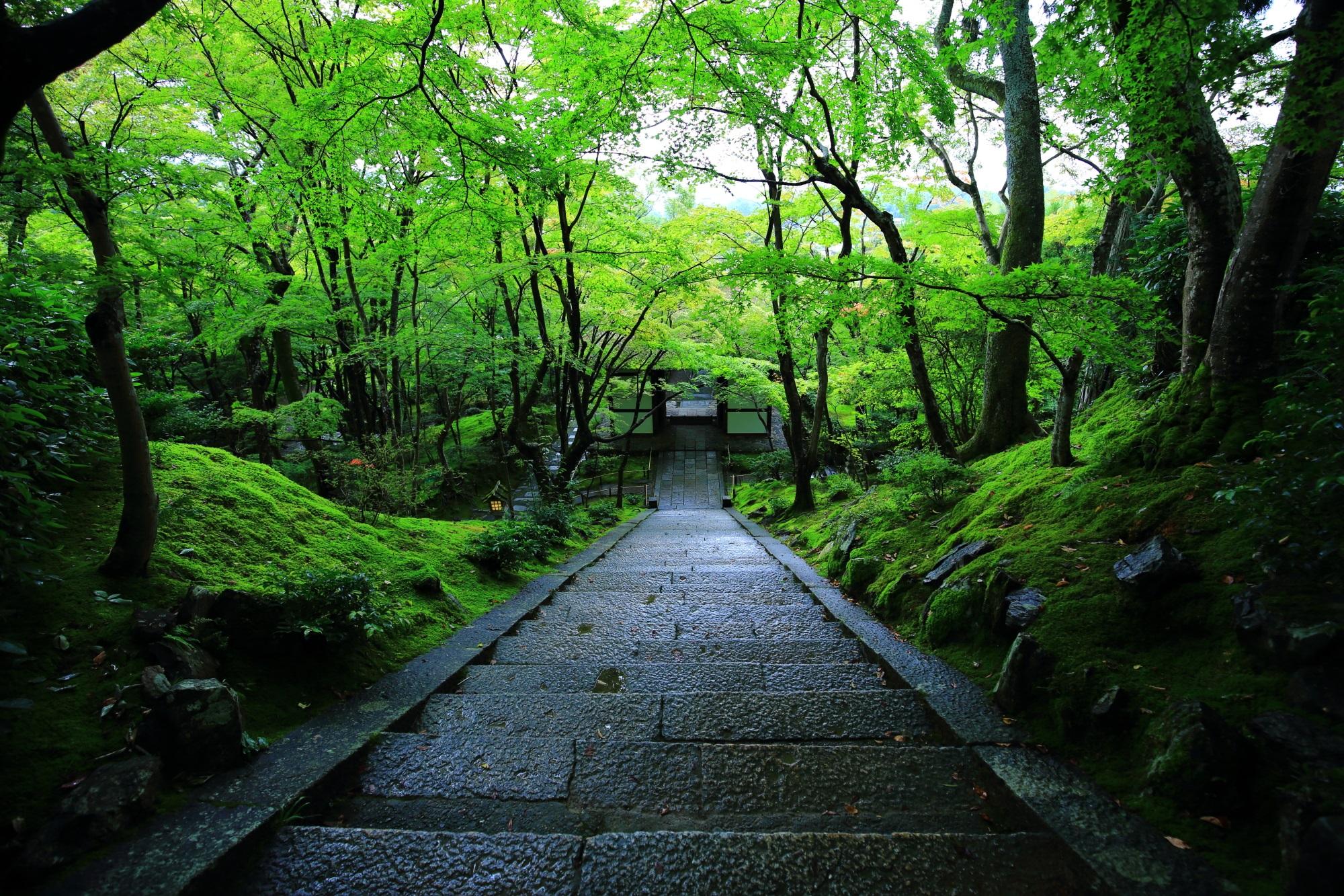 雨に濡れた本堂前石段と仁王門と青もみじと苔