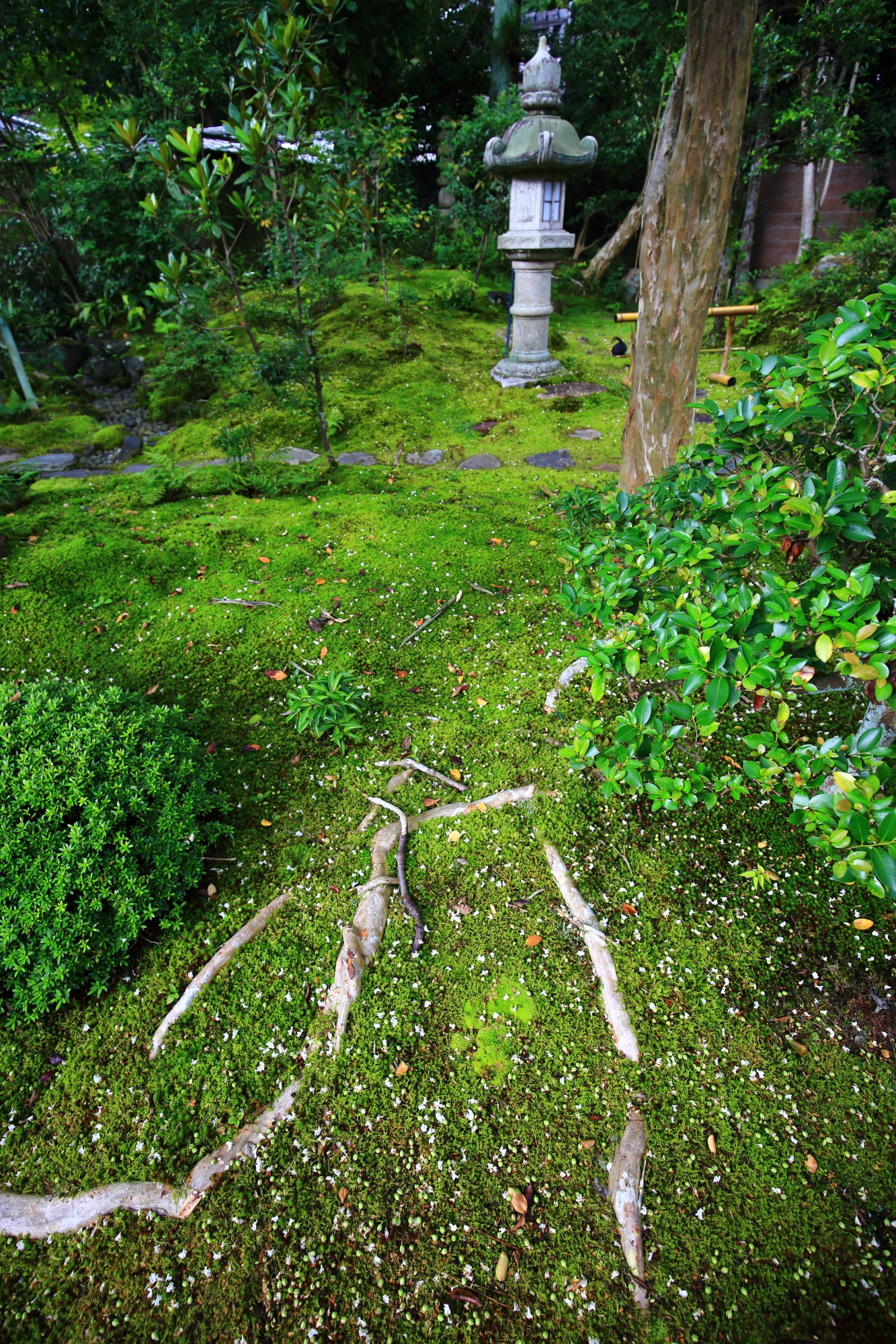 南禅寺大寧軒の苔と灯篭