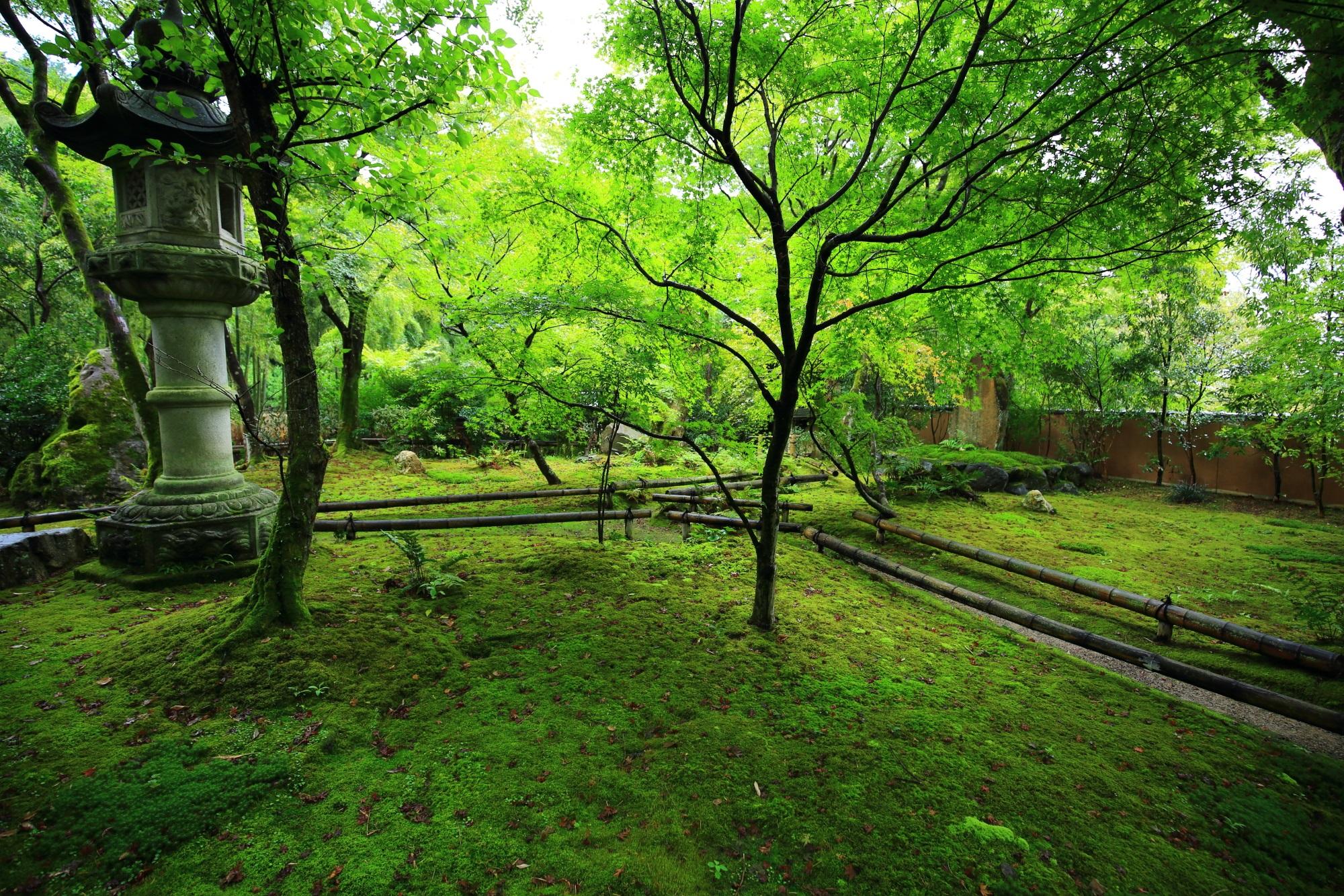 苔庭の美しい青もみじと灯籠