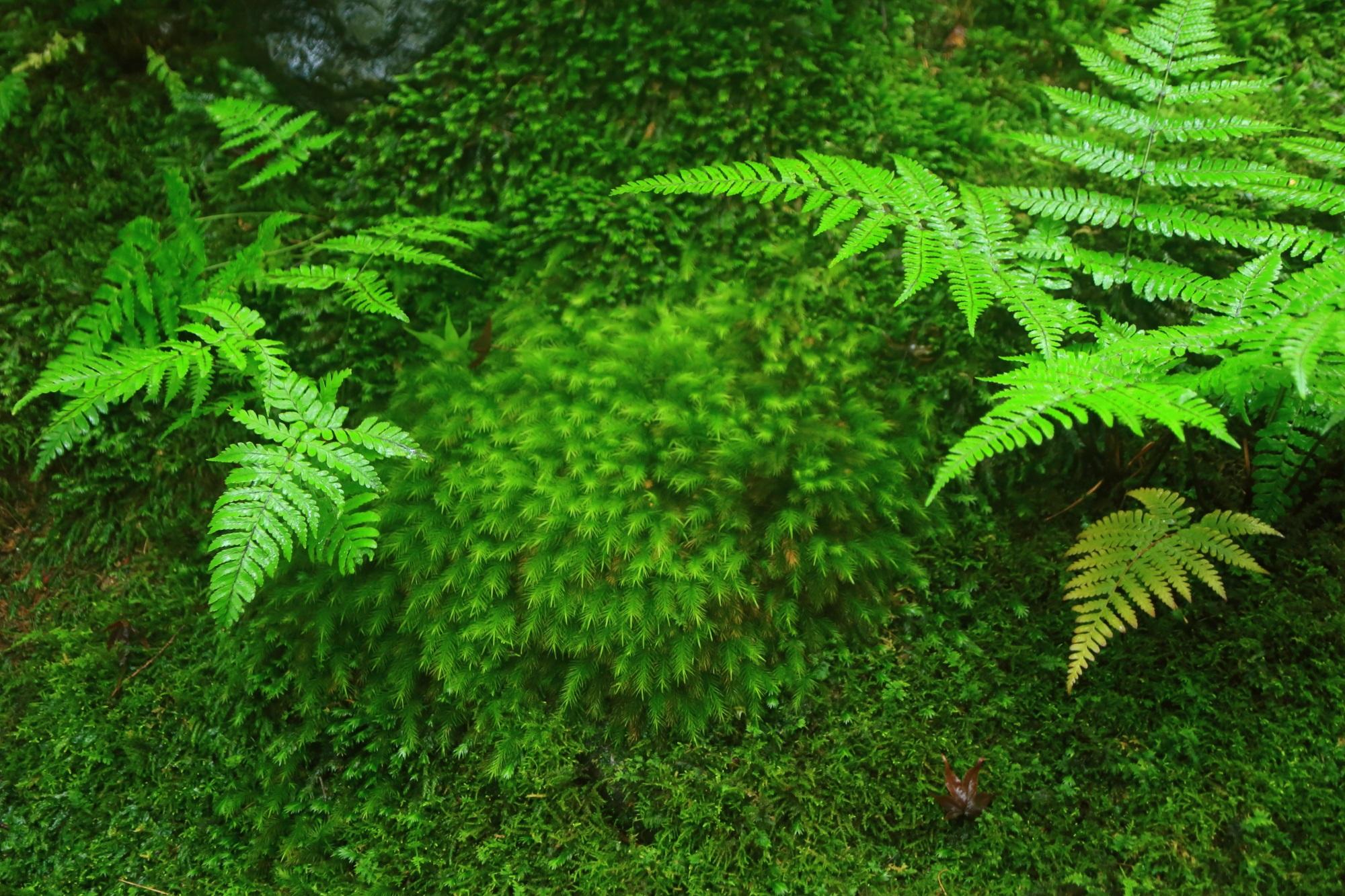 溢れる素晴らしい緑