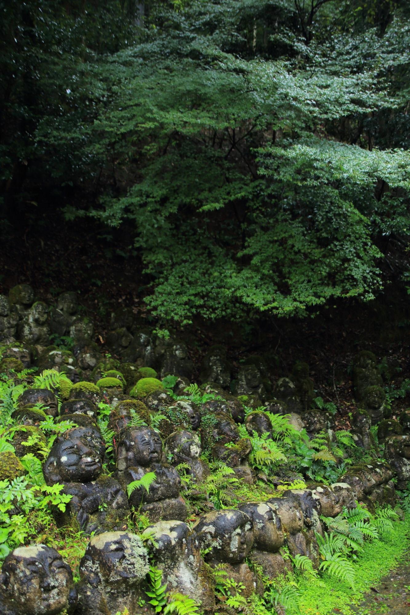 愛宕念仏寺の多宝塔前の千二百羅漢と青もみじ