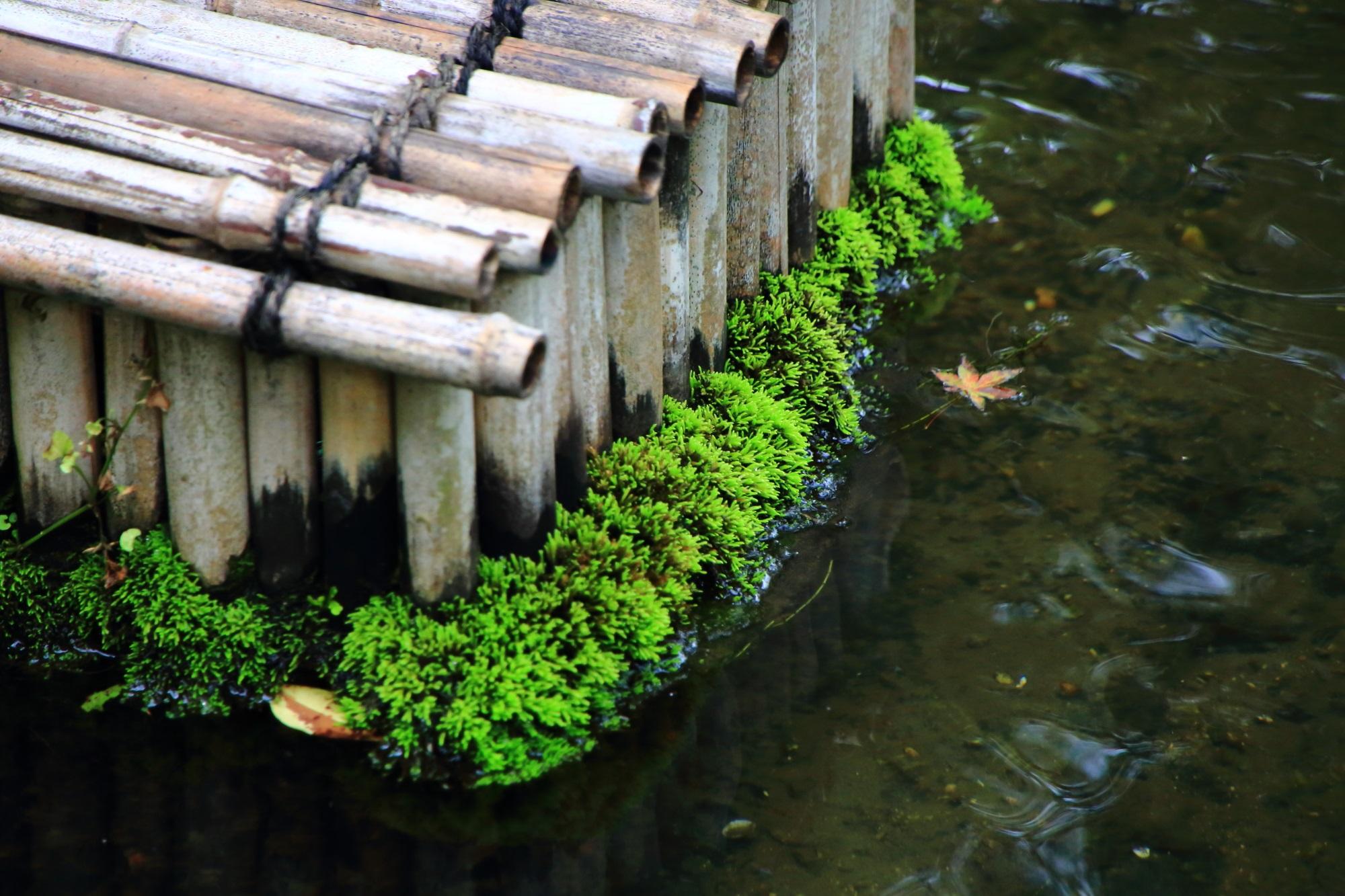 南禅寺塔頭の大寧軒の池と生き生きした苔