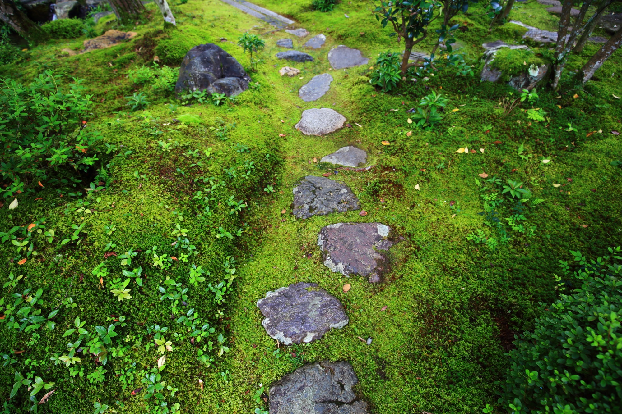 南禅寺大寧軒の苔と飛び石