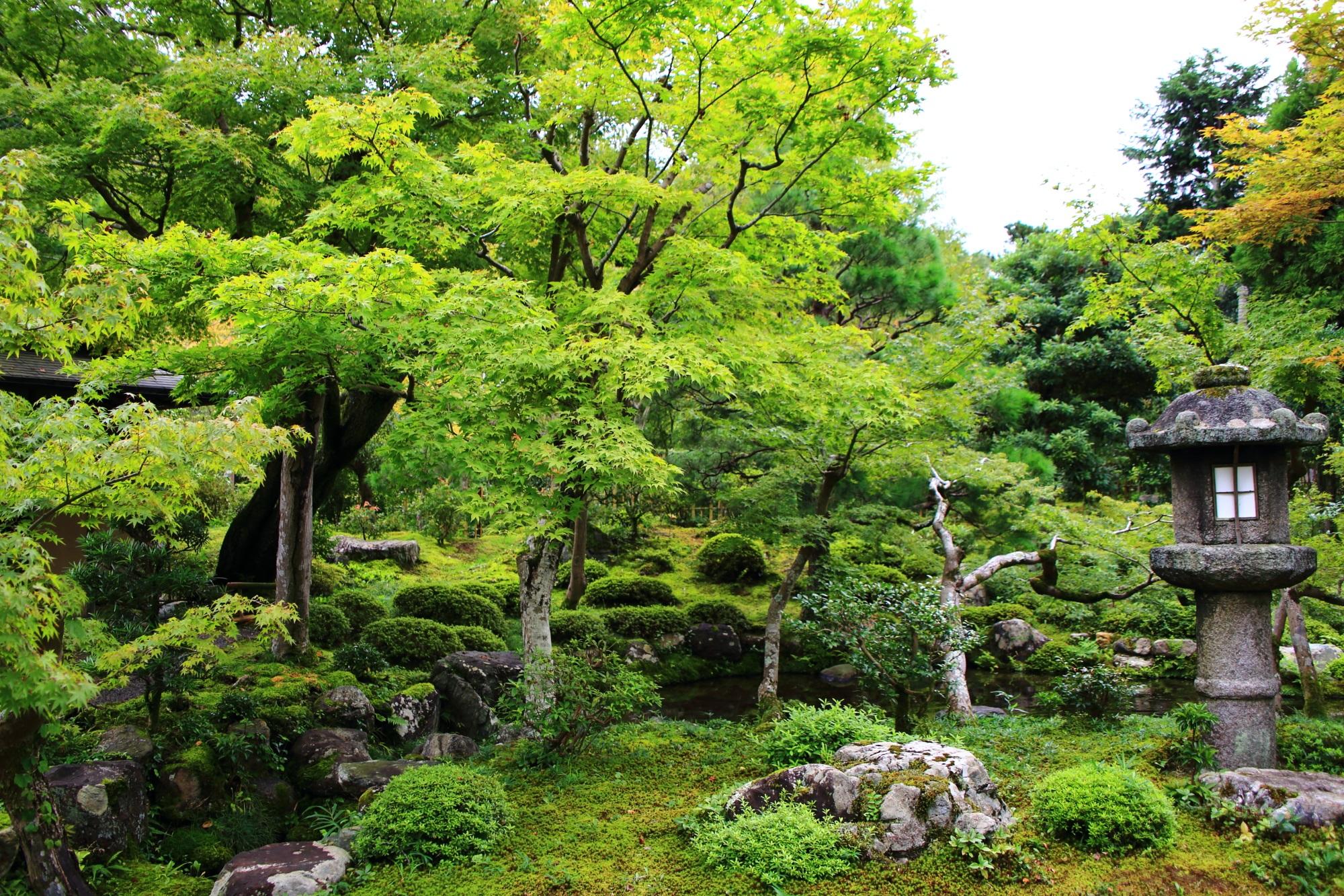 南禅寺大寧軒の池泉回遊式庭園の青もみじ