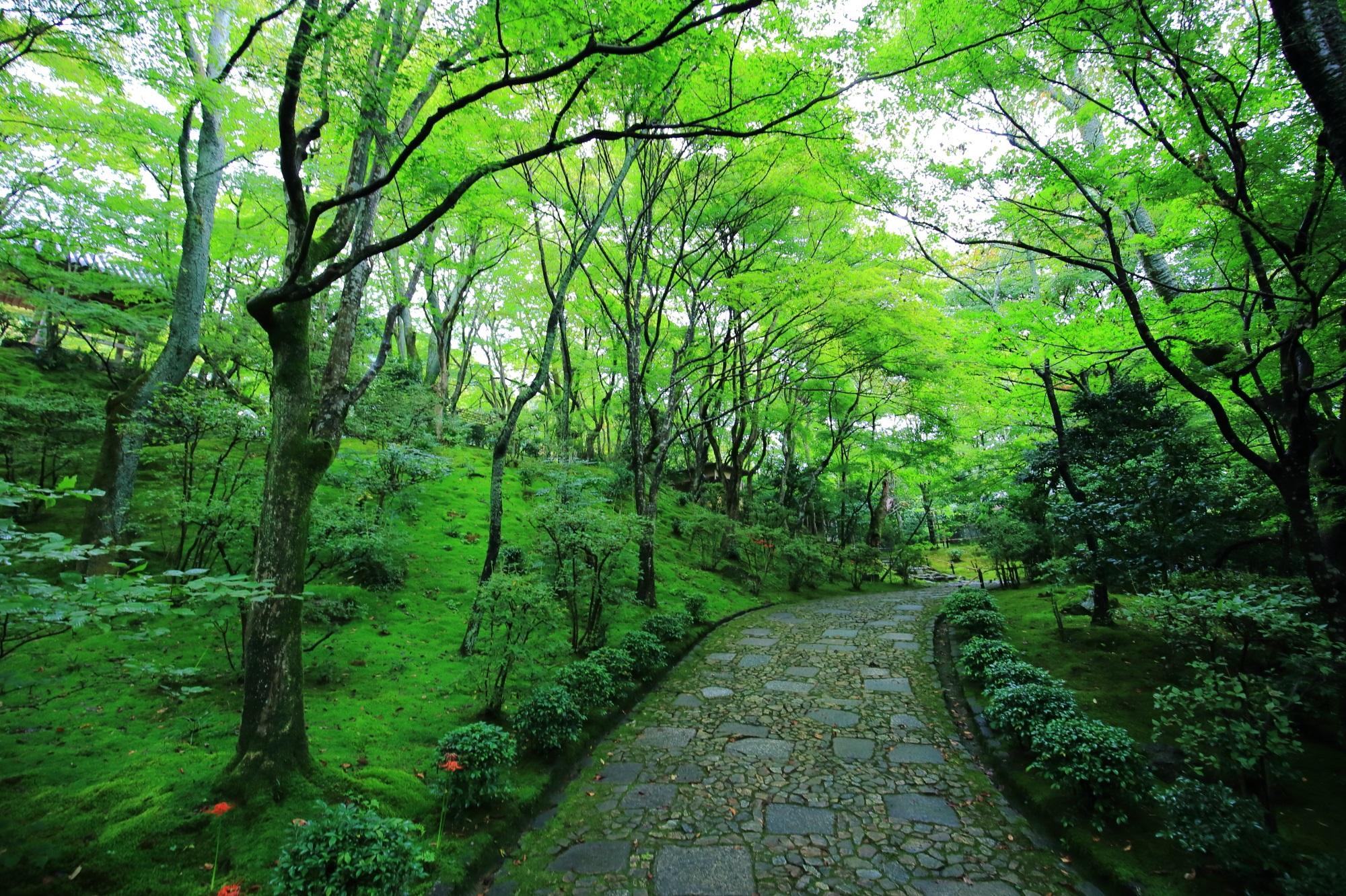常寂光寺の女の碑から仁王門へ続く参道と苔と青もみじ 9月24日