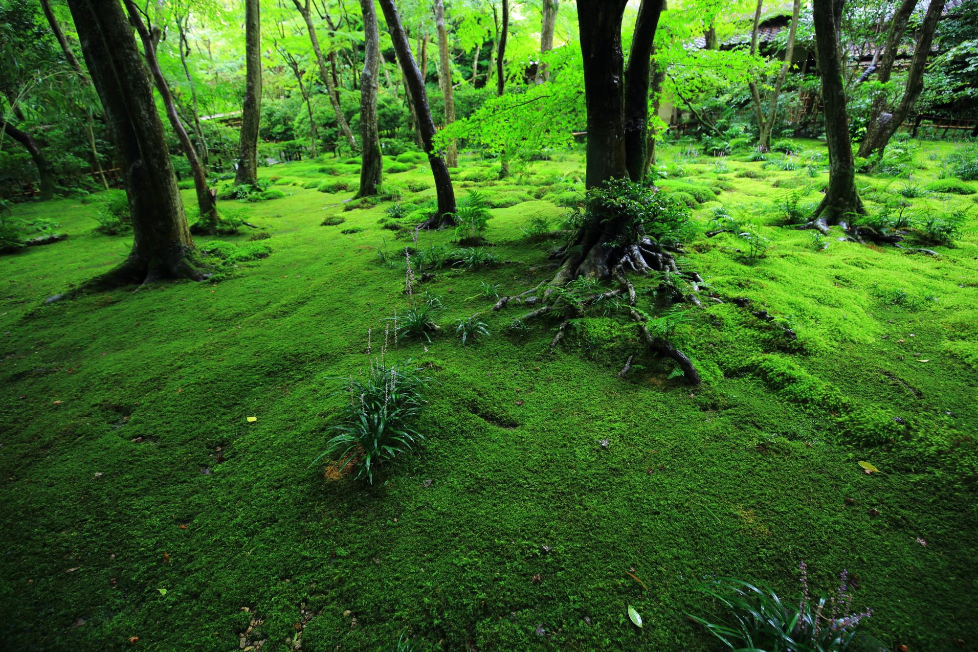 苔以外にも様々な種類の植物や花が添えられる庭園