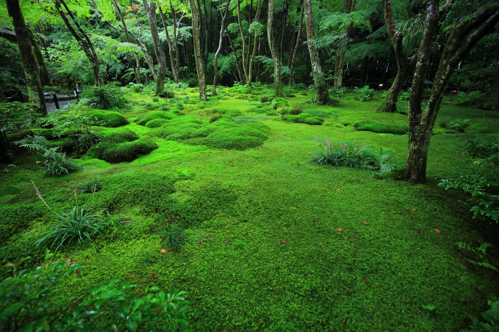 一種類一色の苔ではなく多種多彩な苔に包まれる苔庭