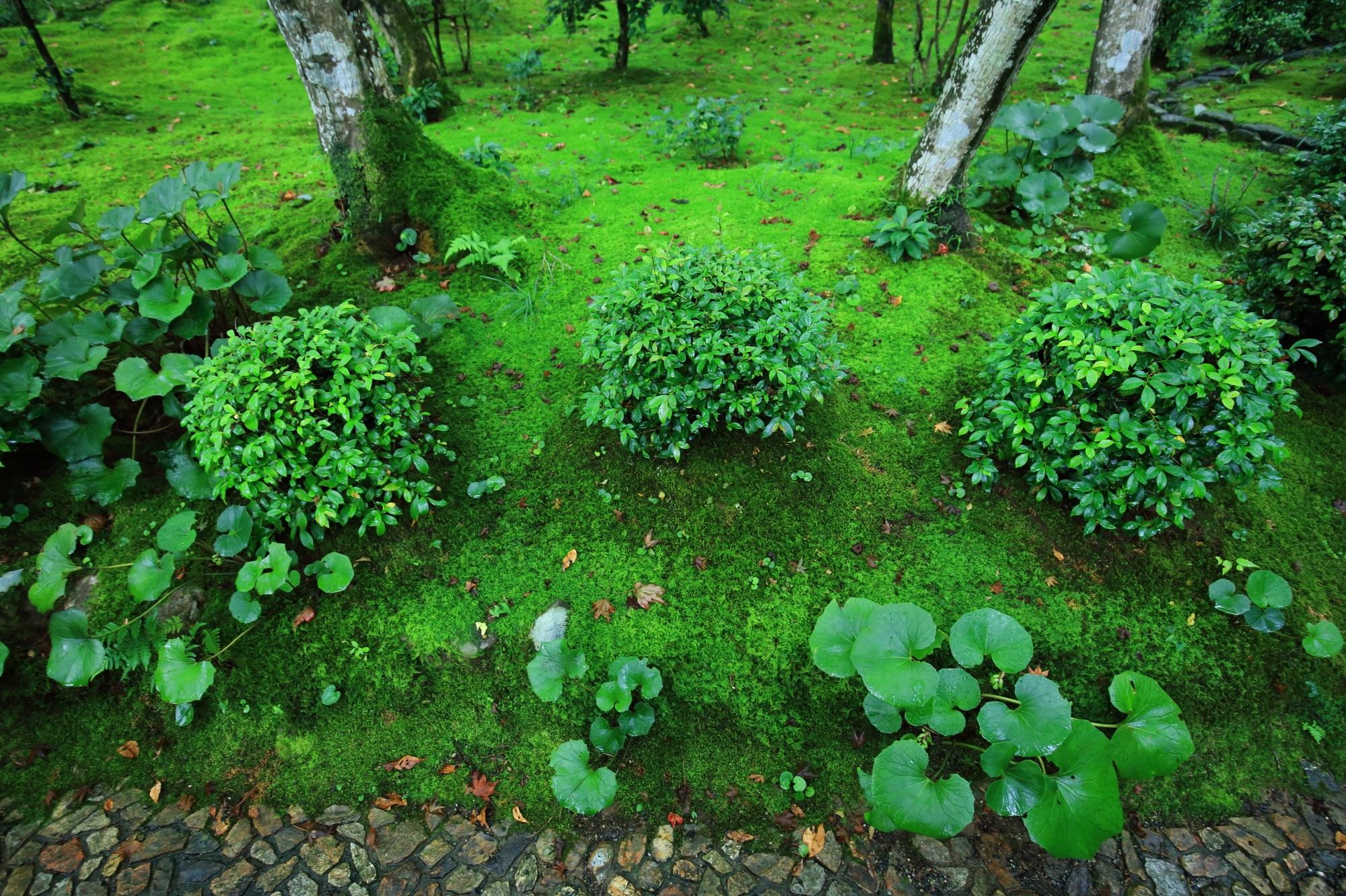 女の碑から仁王門へ続く参道の綺麗な苔