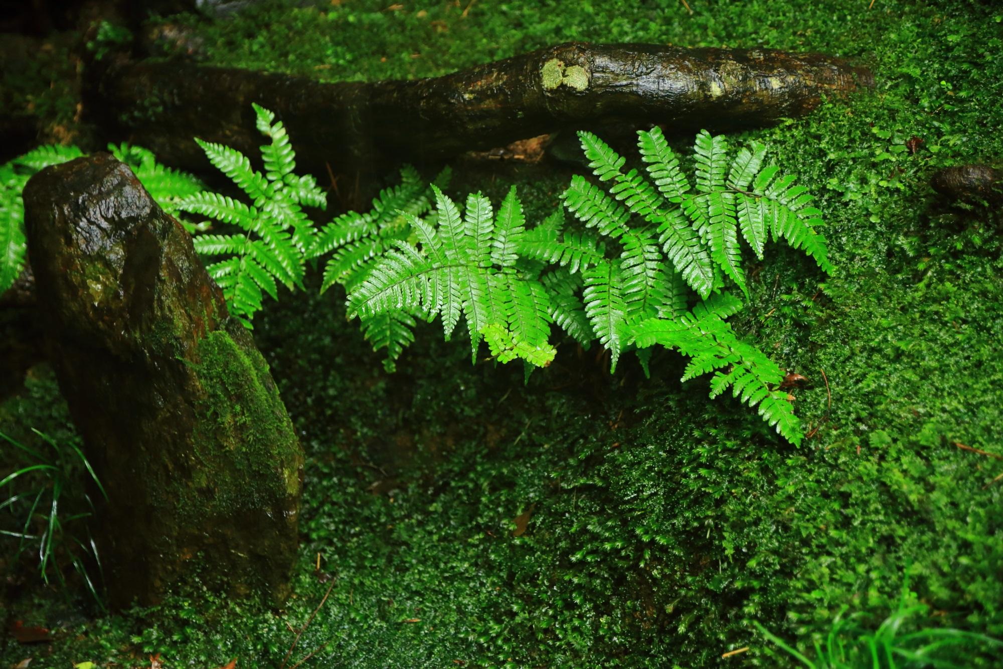 美しく潤う石や木の根