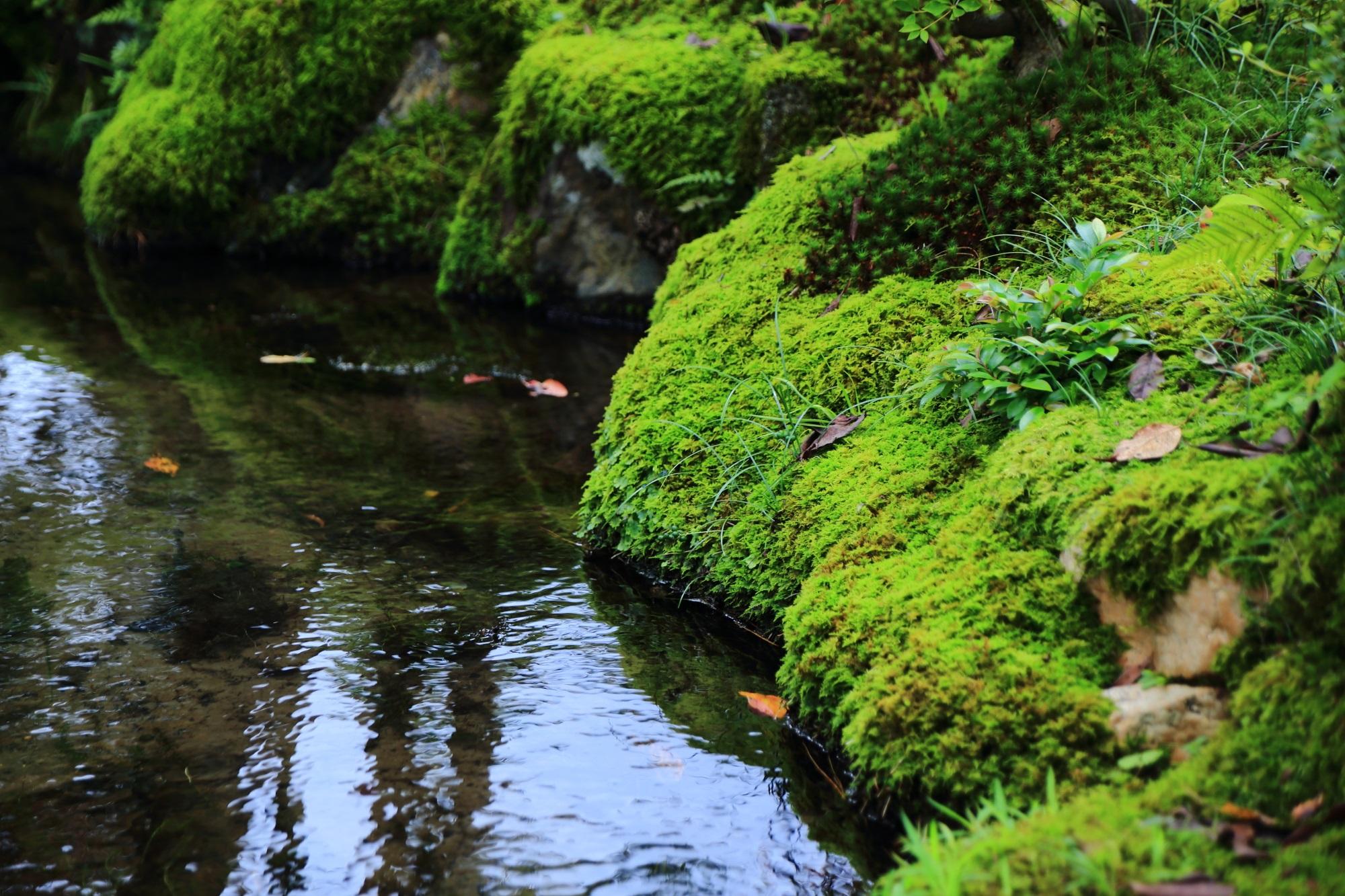 南禅寺大寧軒の池と苔
