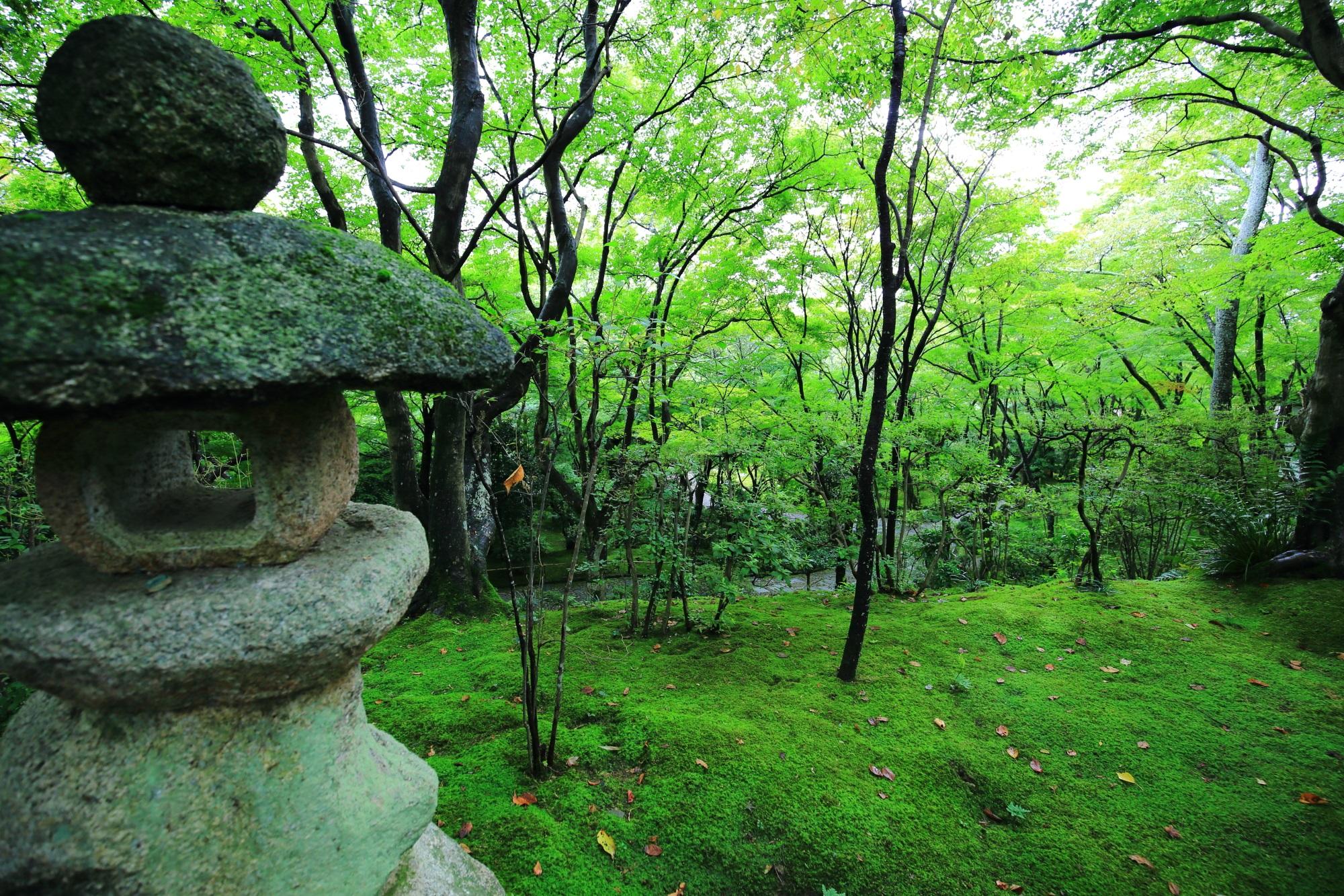 常寂光寺の女の碑付近の灯籠と苔