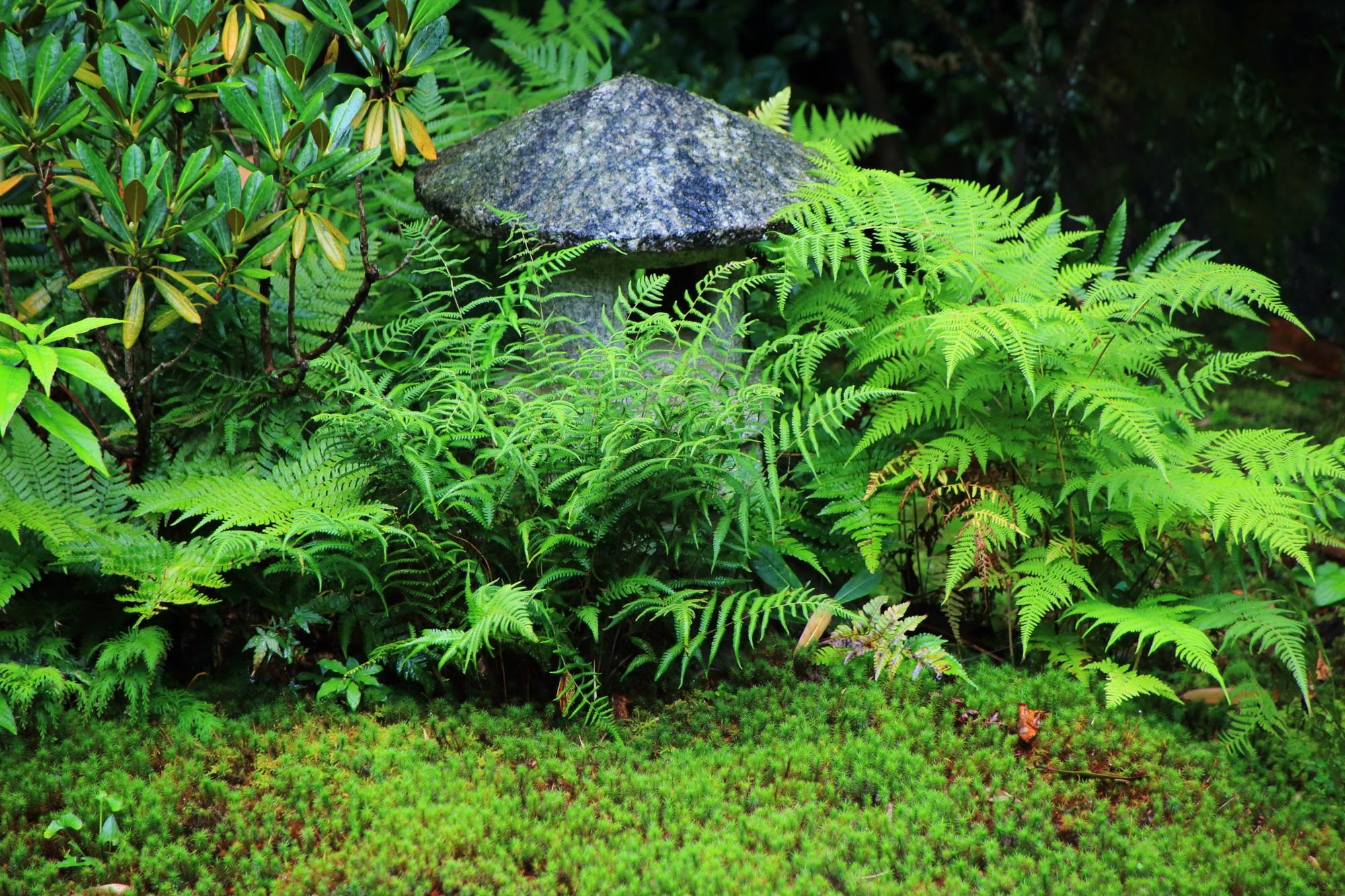 本堂中庭の灯籠とシダと苔
