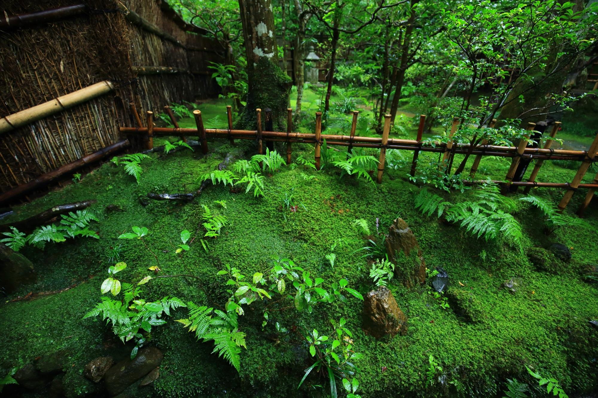 入口付近の圧倒的な緑の苔やシダ